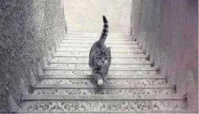 Mistero del gatto scende o sale la soluzione - Foto di scale ...