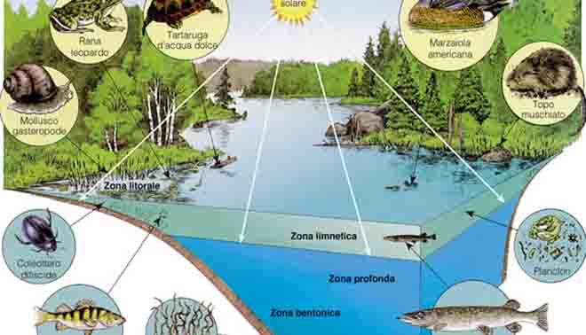 Ecosistema definizione for Piccolo cottage che vive