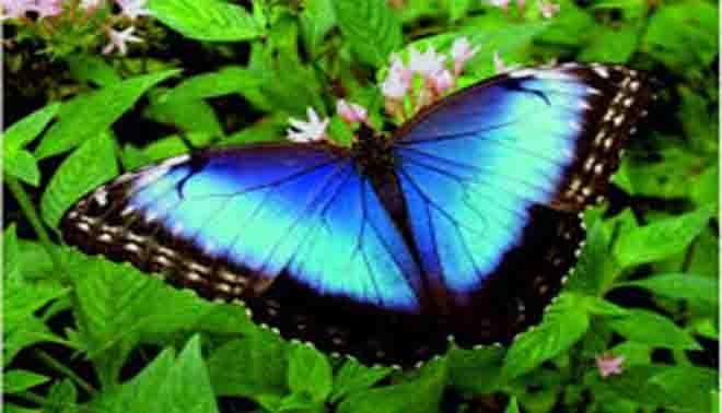 Farfalle E Falene Descrizione