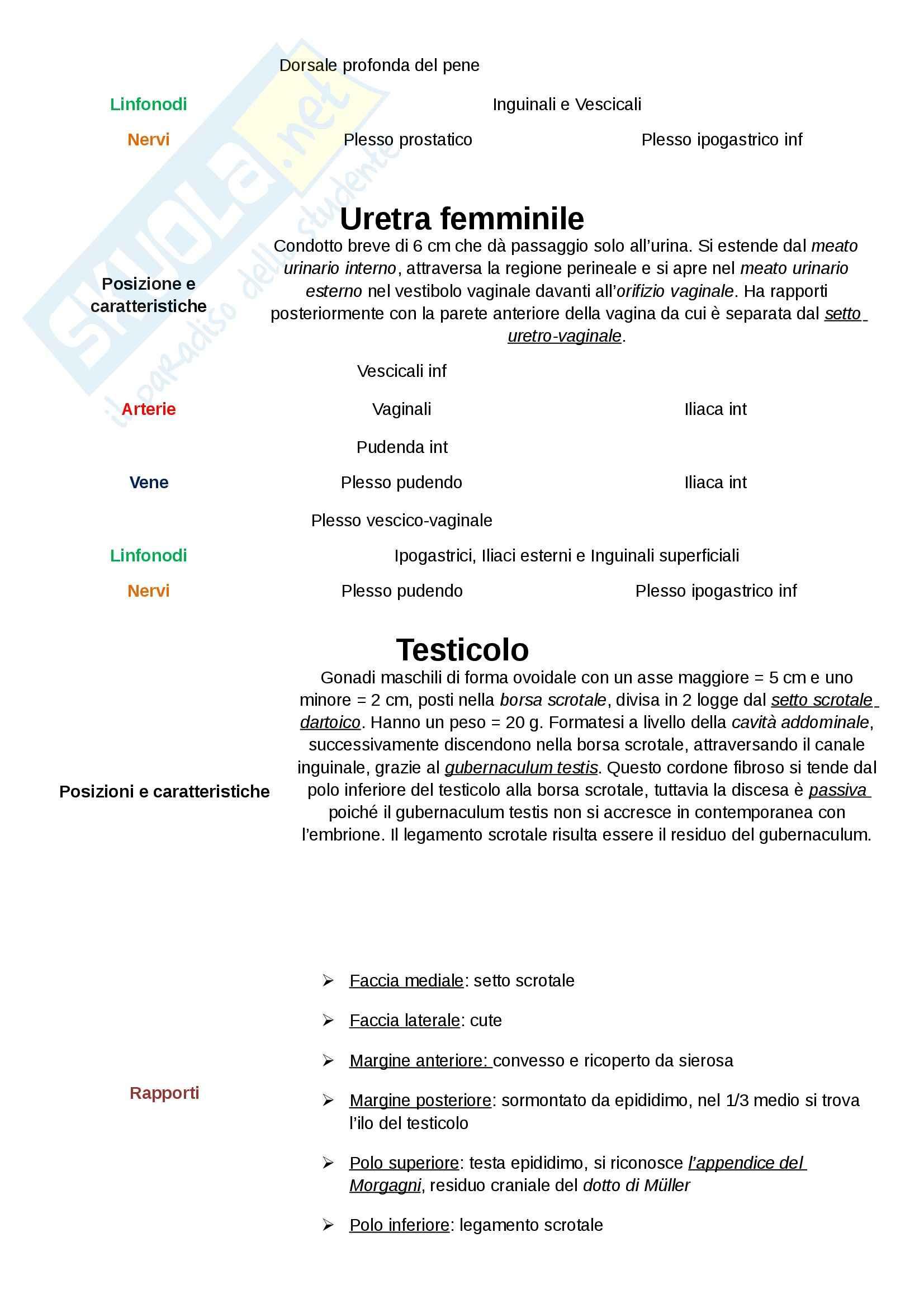 Anatomia umana - uretra e altre nozioni Pag. 2