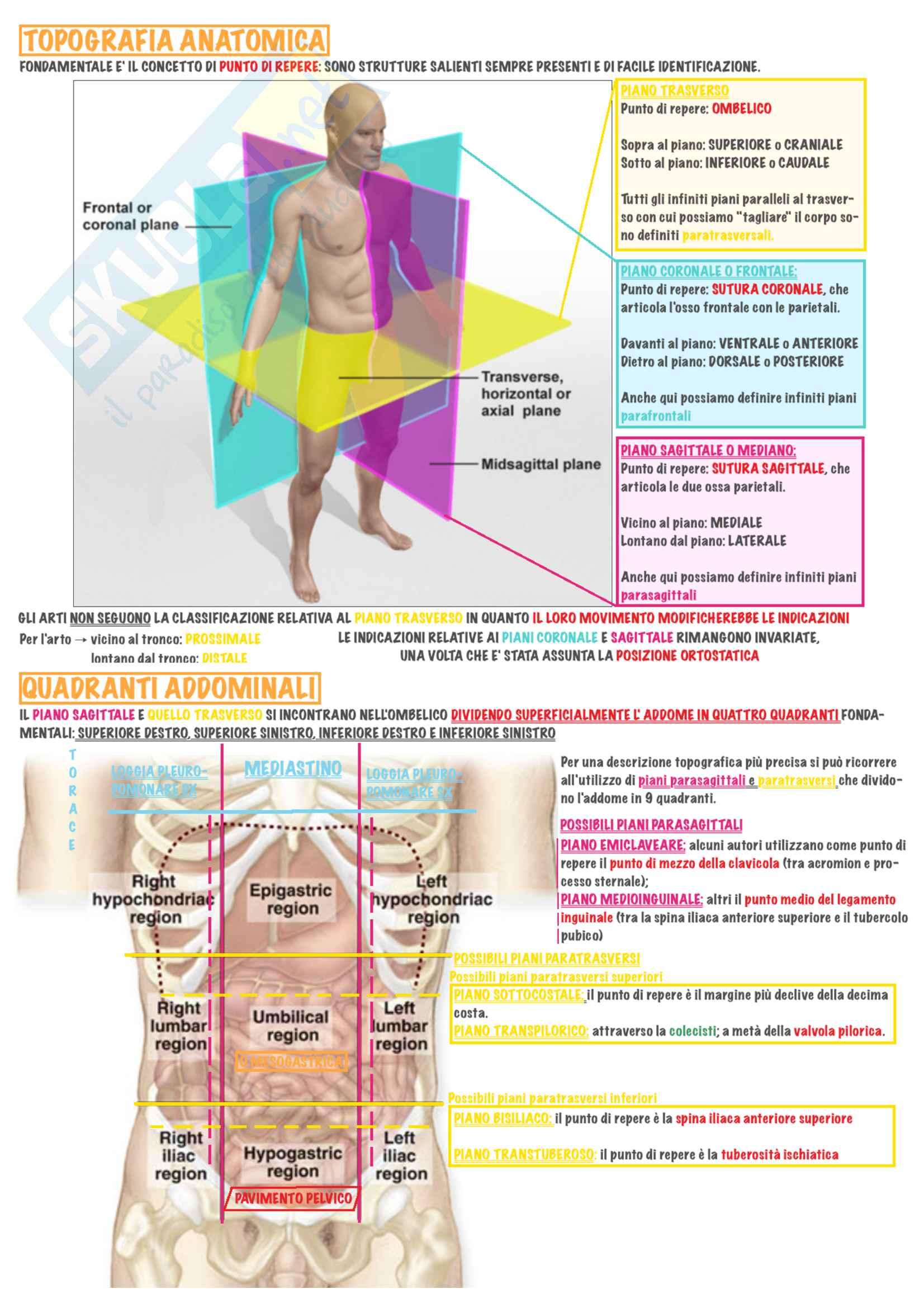Anatomia Topografica (schemi)