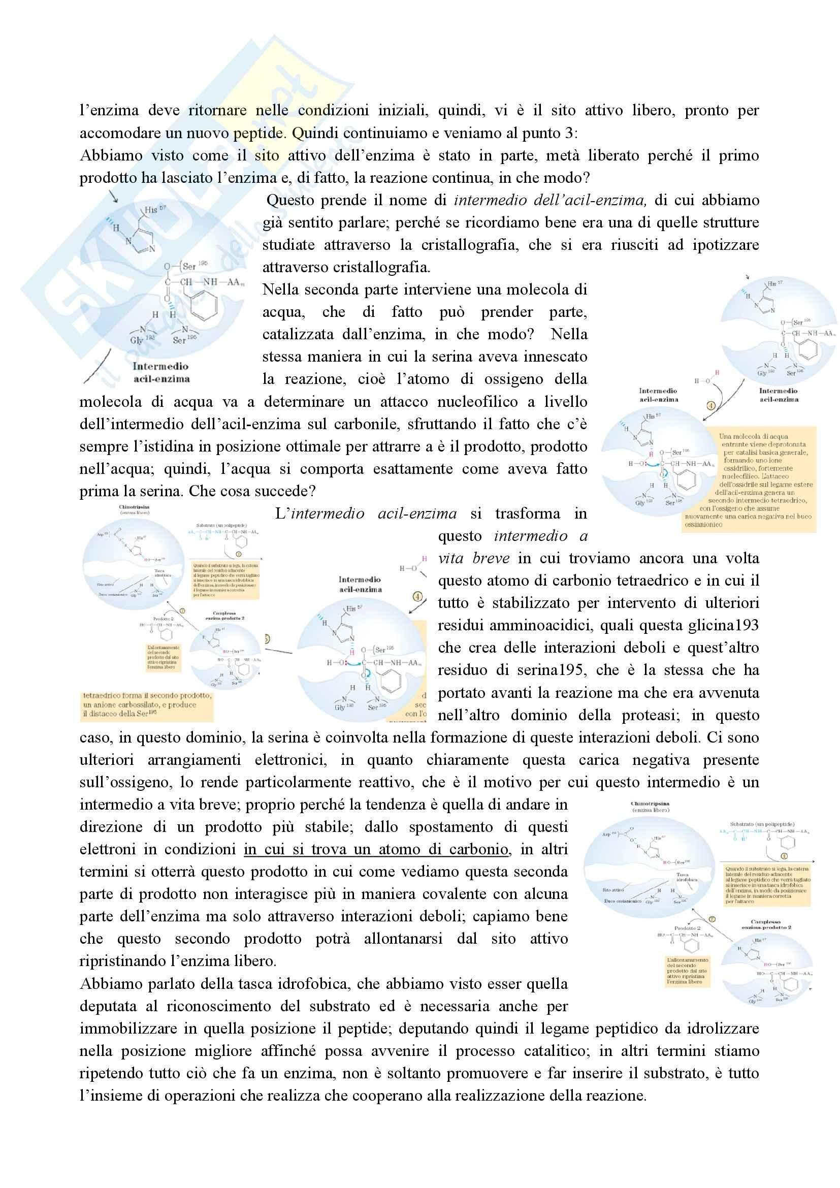 Enzimologia - catalisi enzimatica Pag. 2