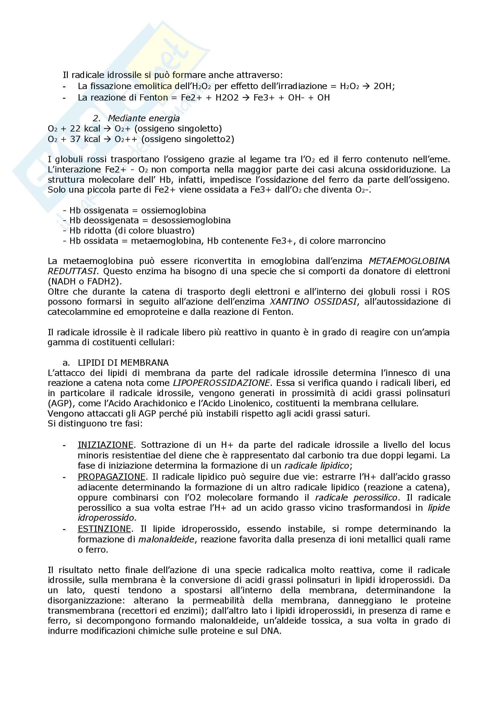 Biochimica  e Patologia clinica - Appunti Pag. 2