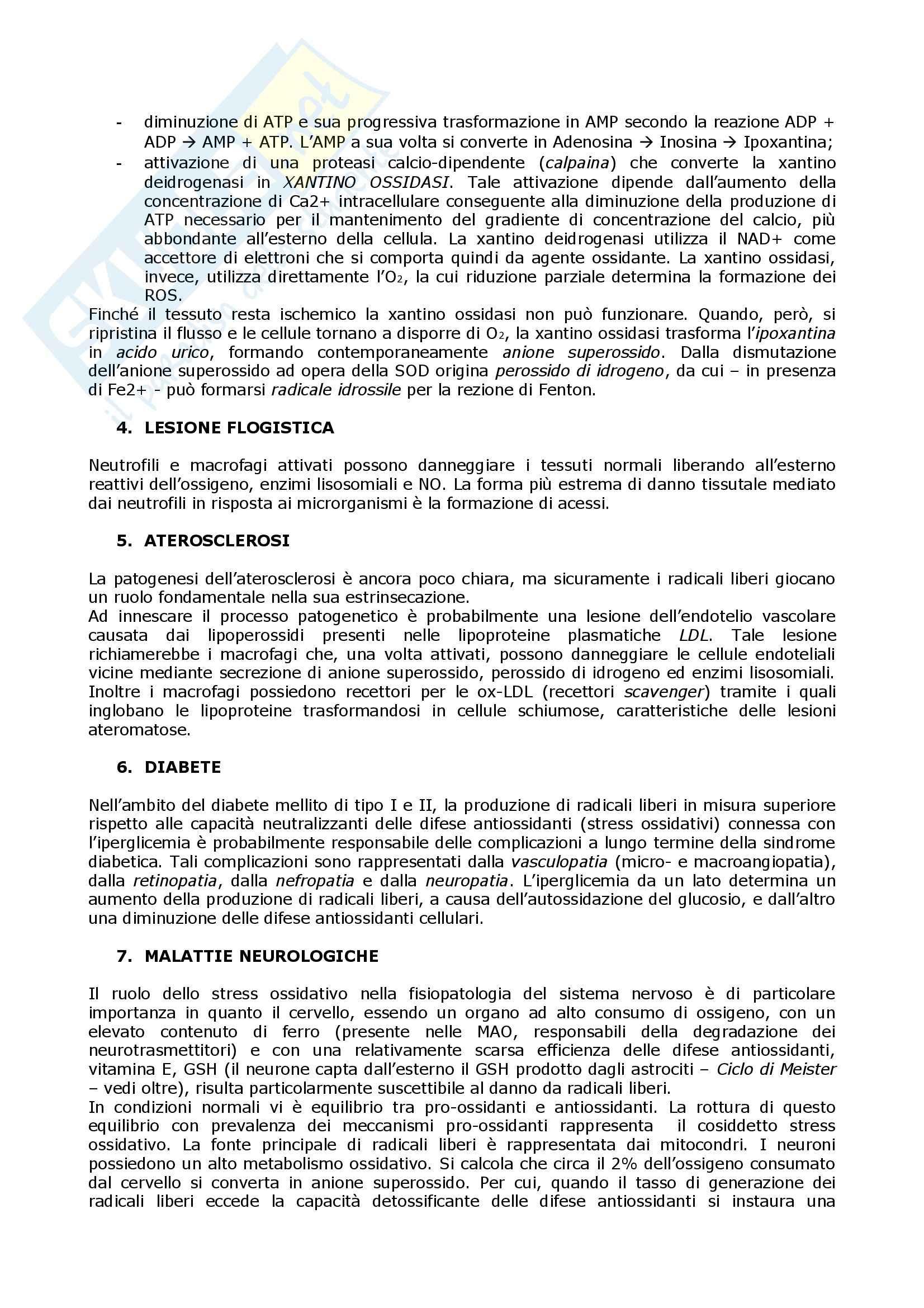 Biochimica  e Patologia clinica - Appunti Pag. 6
