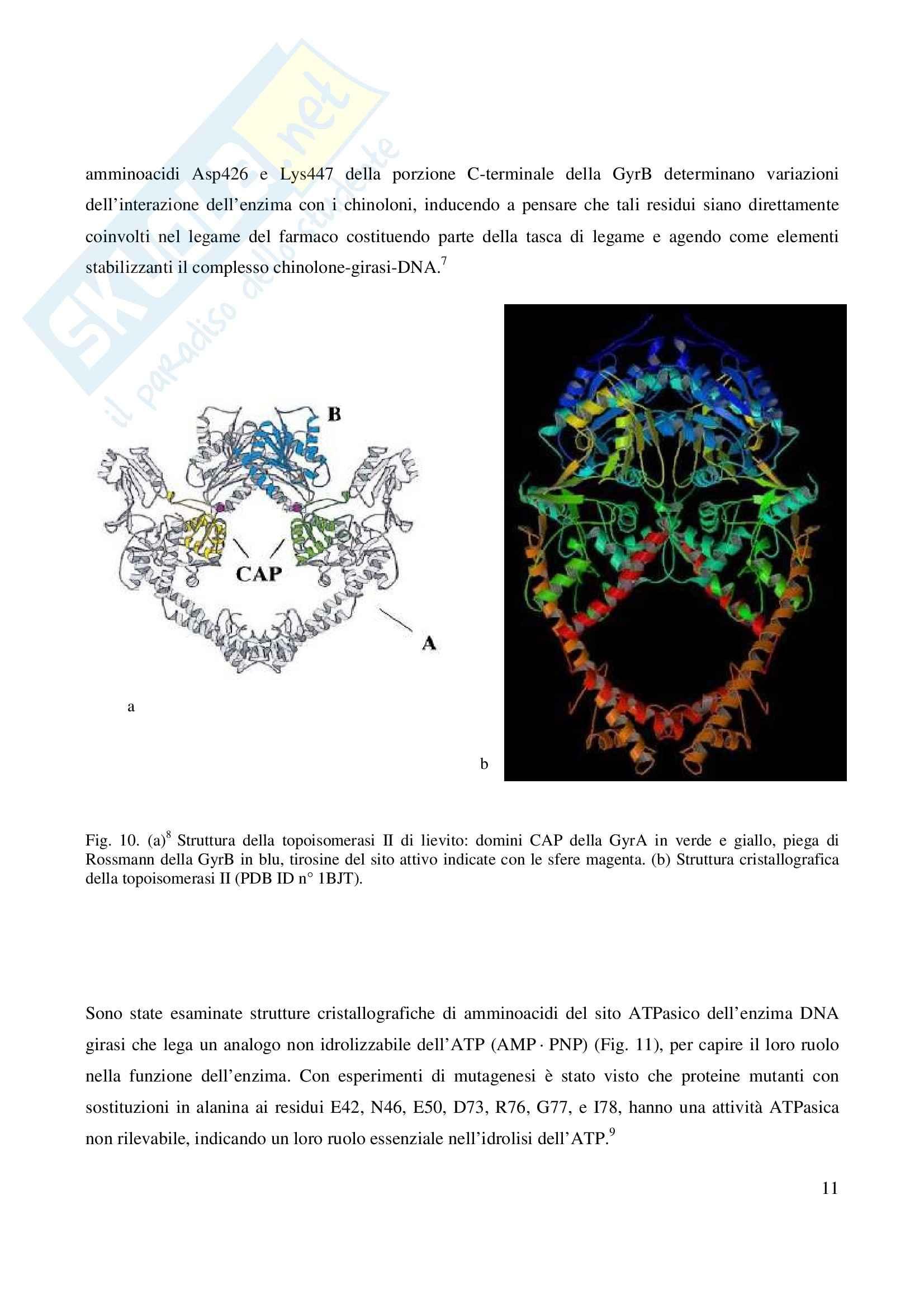 Chimica farmaceutica - fluorochinoloni Pag. 11