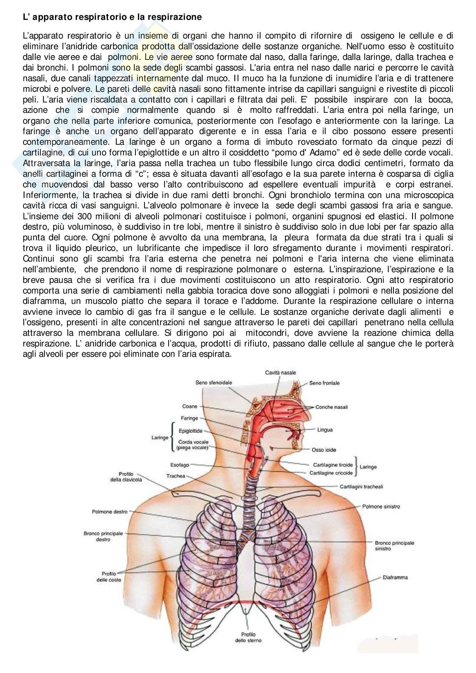 La prof di anatomia - 5 4