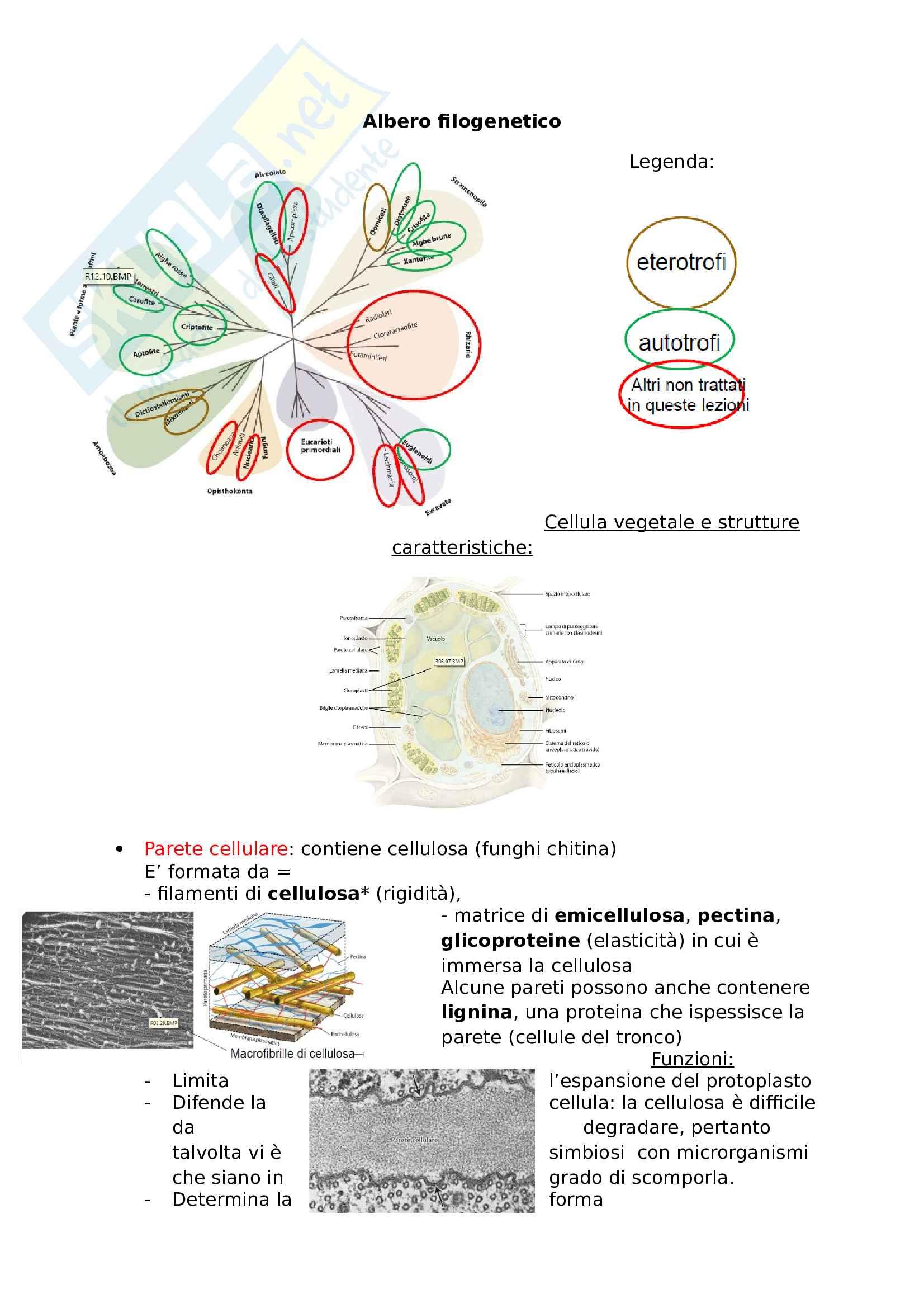 Botanica, Biologia vegetale