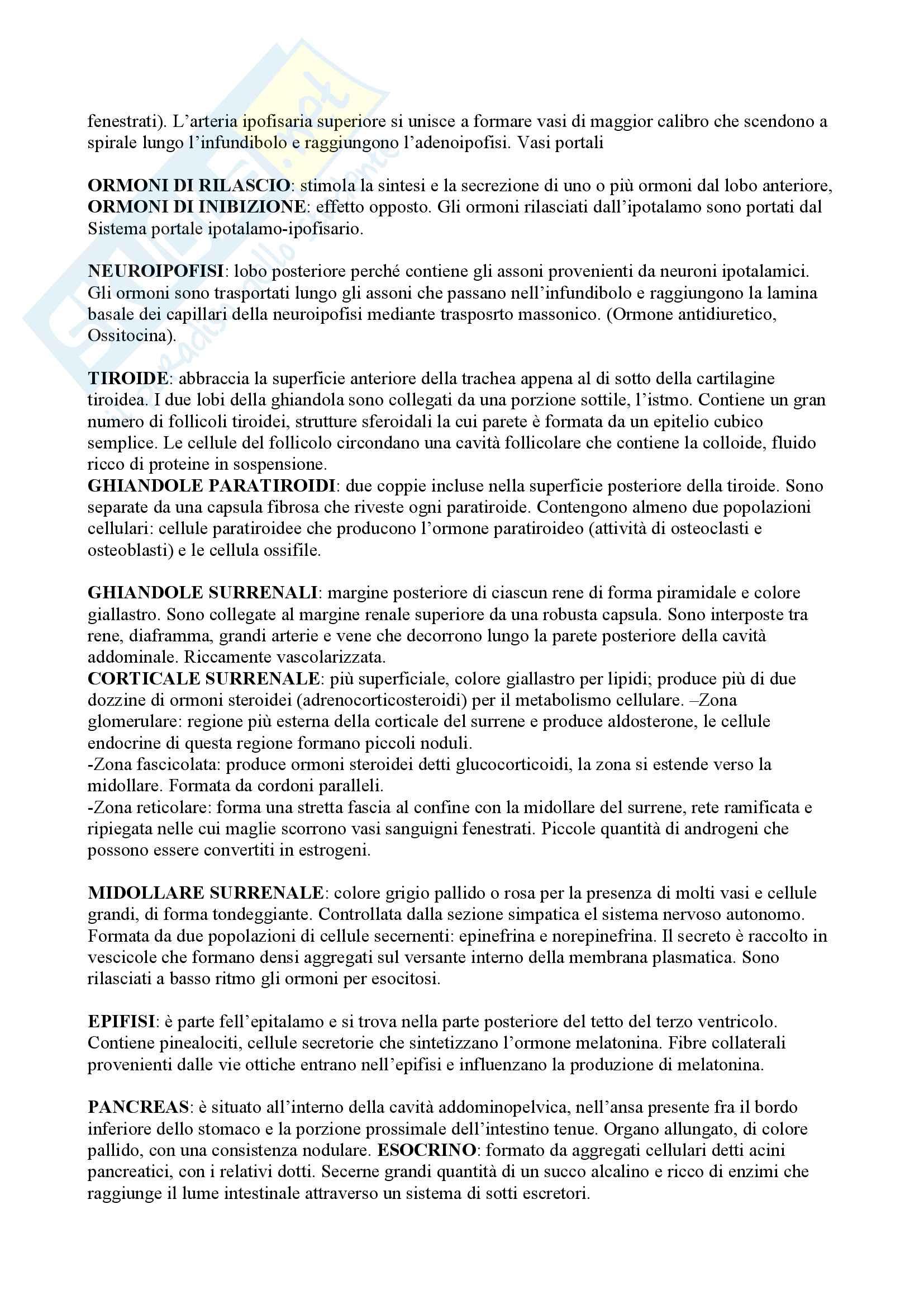 Riassunti Anatomia per Professioni Sanitarie Pag. 2