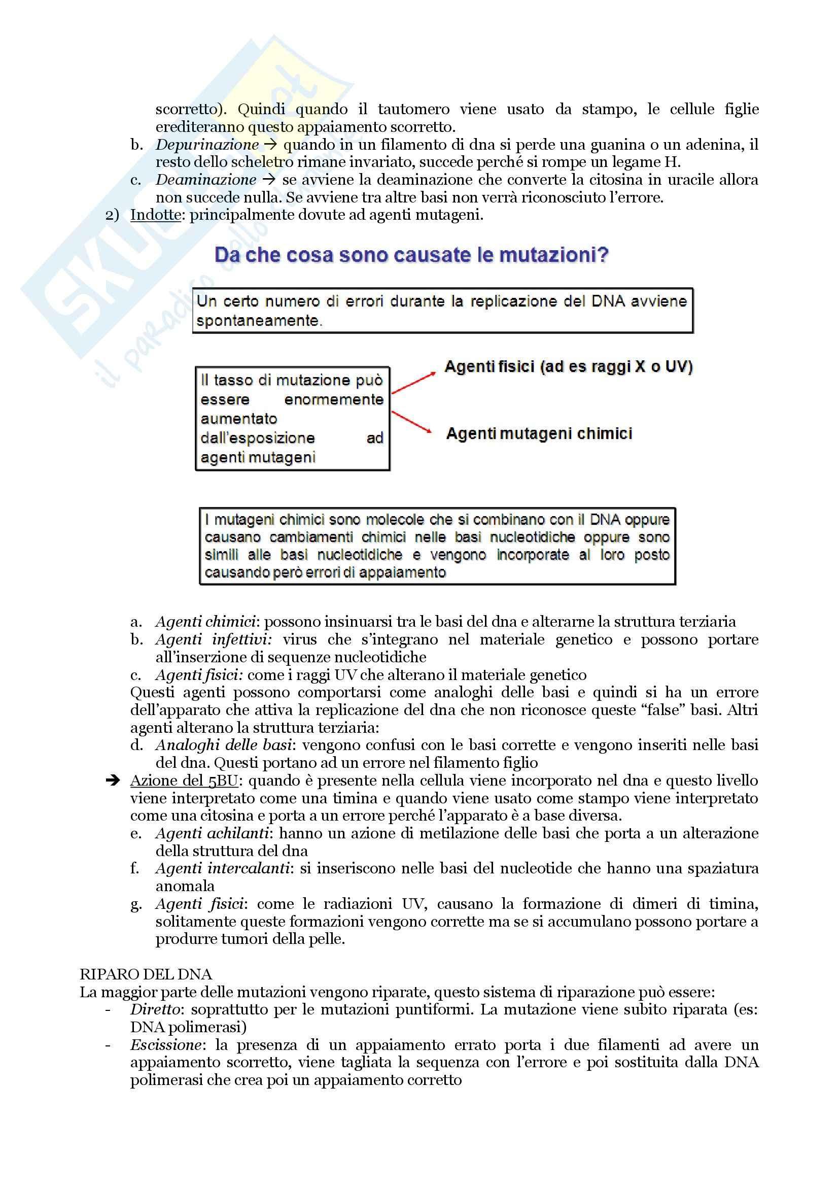 Biologia Applicata - Appunti, Slides e Schemi libro Pag. 56