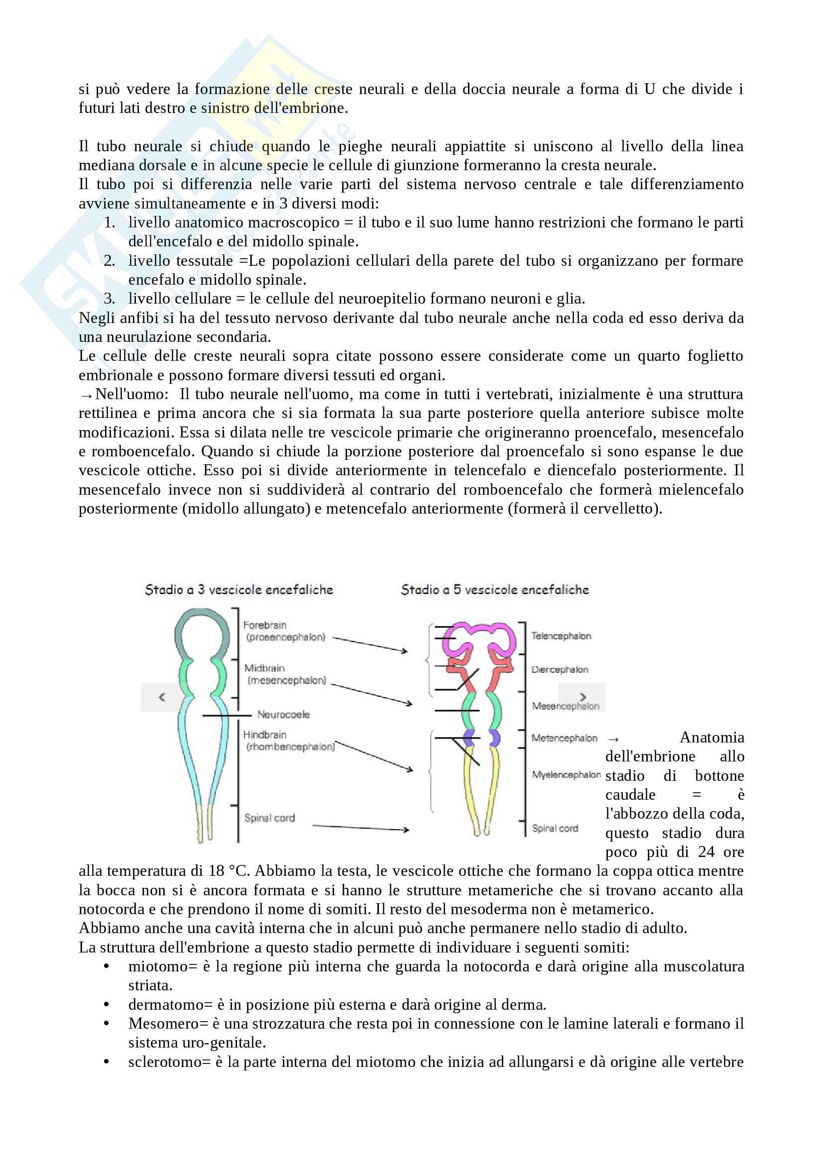 Appunti biologia dello sviluppo Pag. 31