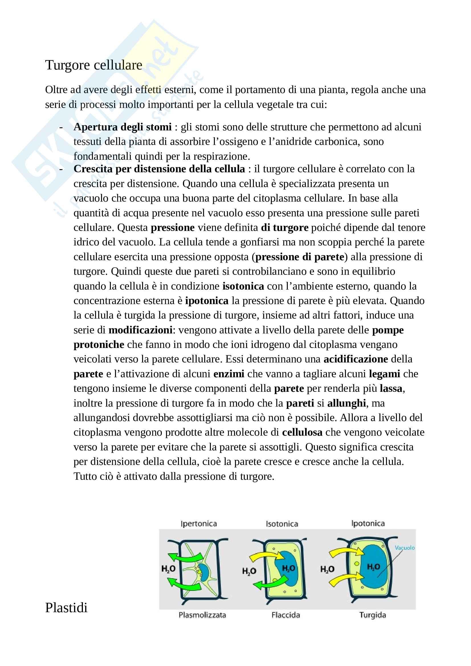 Appunti di botanica generale Pag. 16