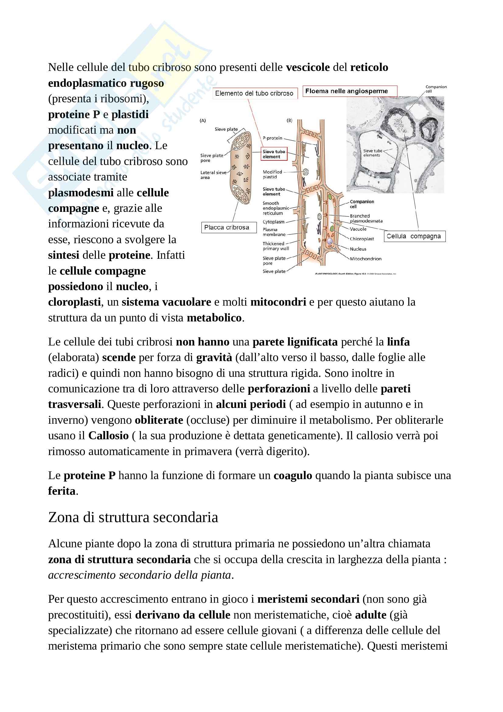 Appunti di botanica generale Pag. 36