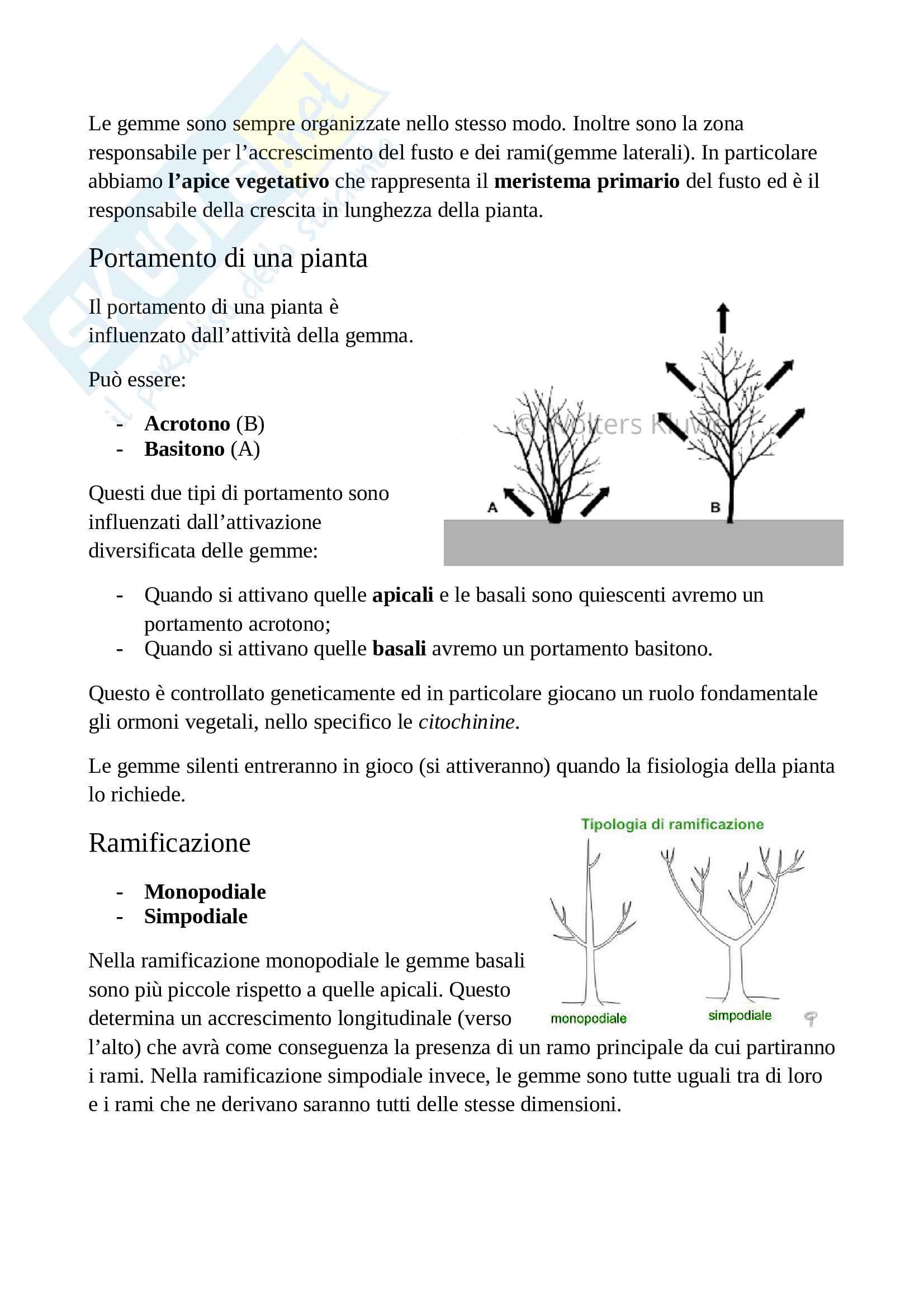 Appunti di botanica generale Pag. 41