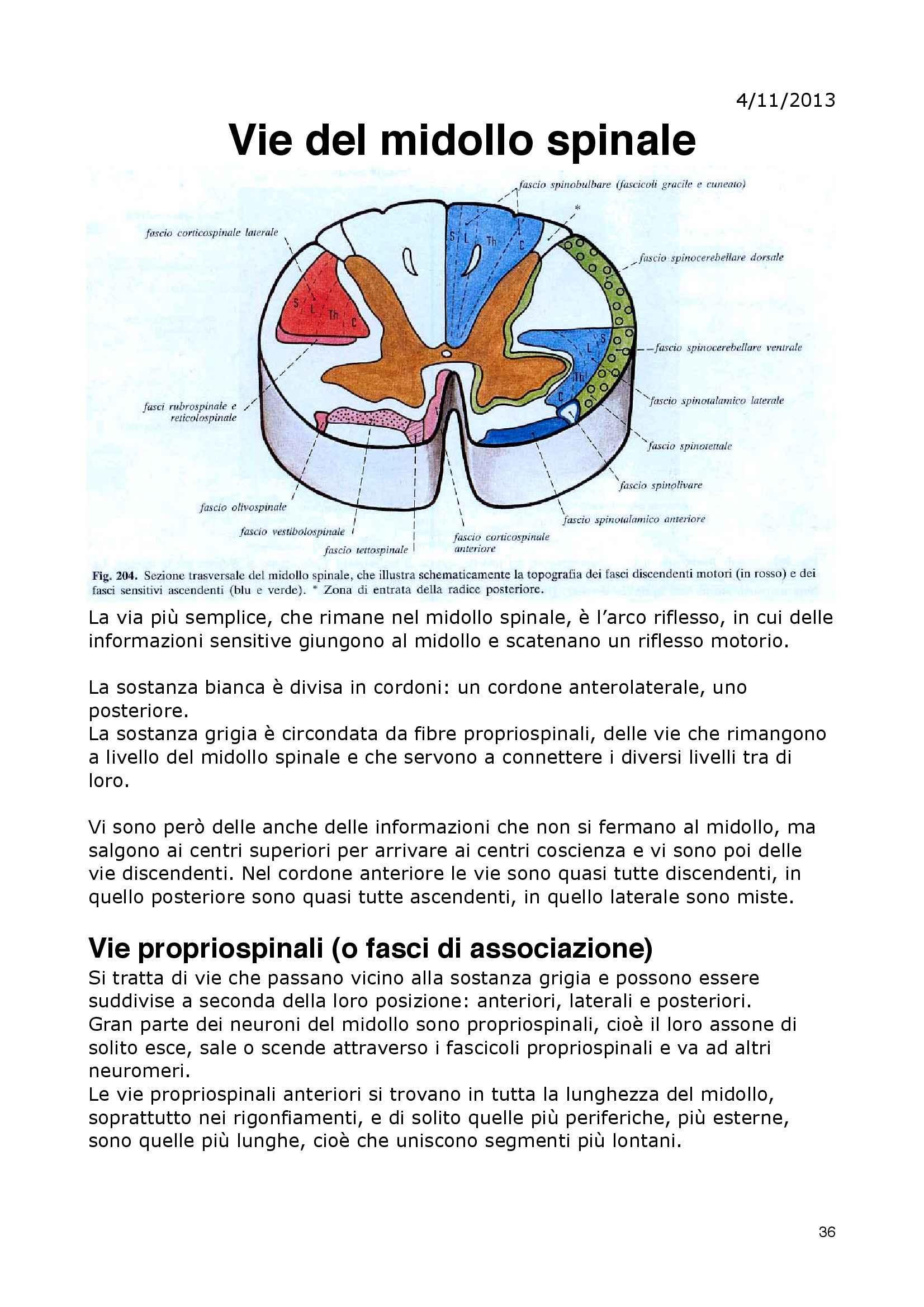 Appunti di Neuroanatomia - Anatomia II Pag. 36