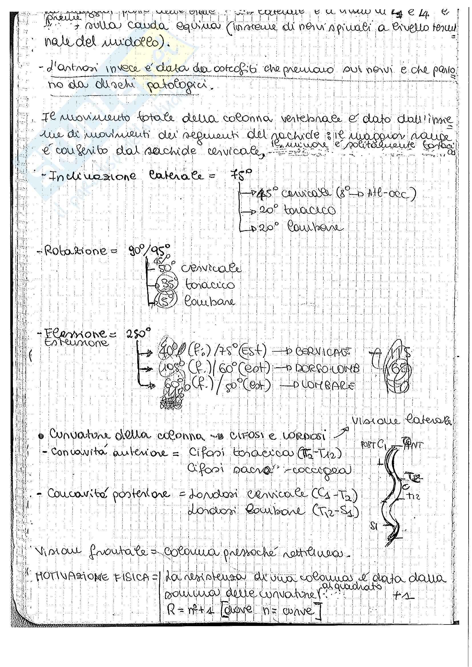 Riassunto esame Anatomia umana 1, prof. Pirino Pag. 46