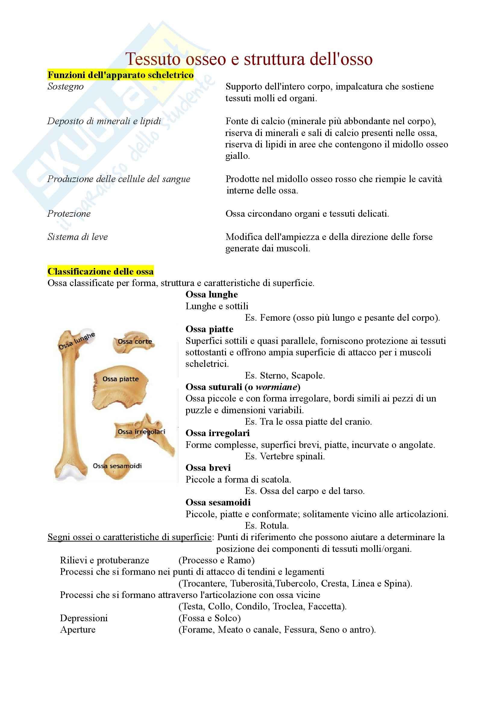 Anatomia e fisiologia - Tessuto osseo e struttura dell'osso