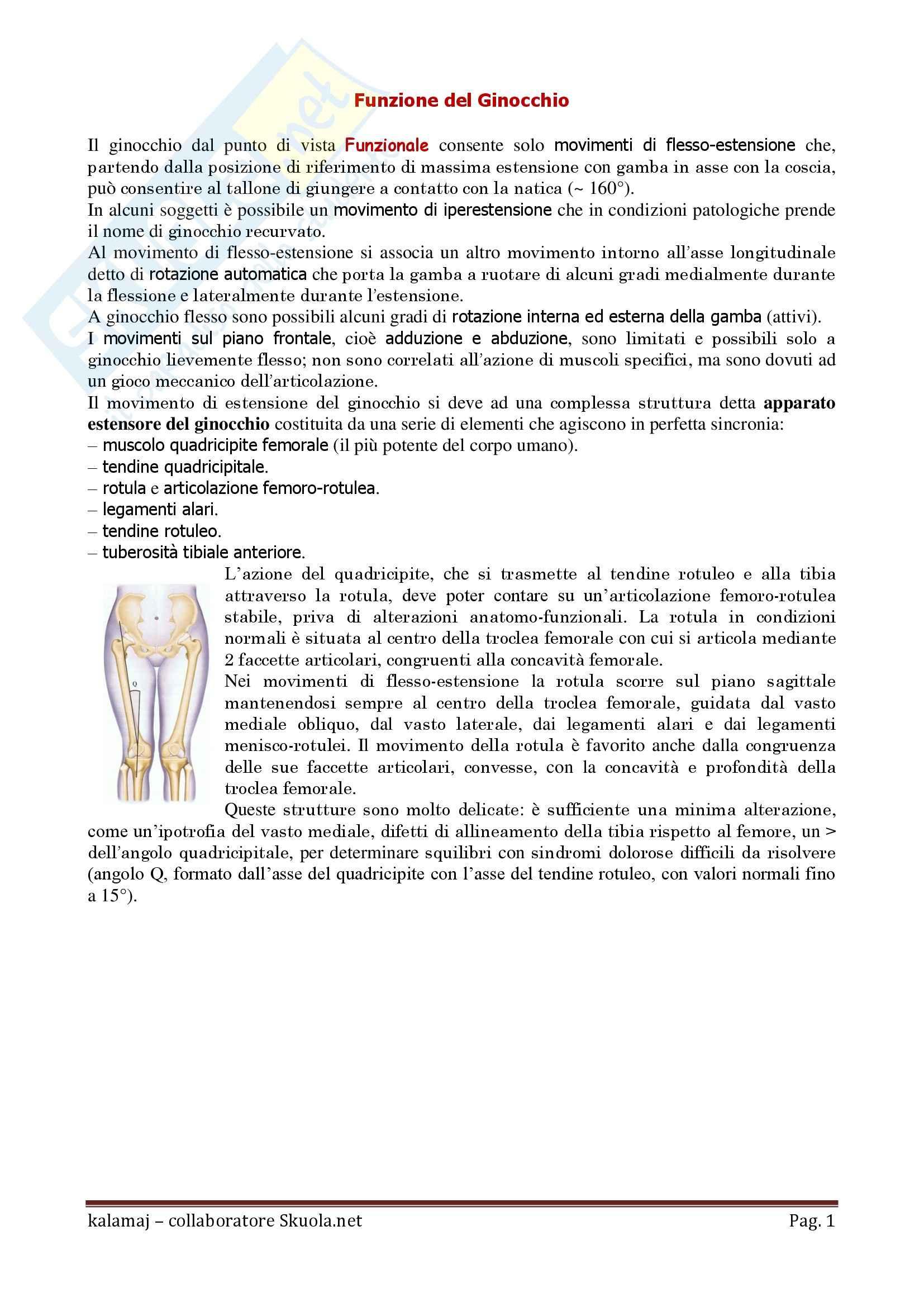 Anatomia umana - Funzione del Ginocchio