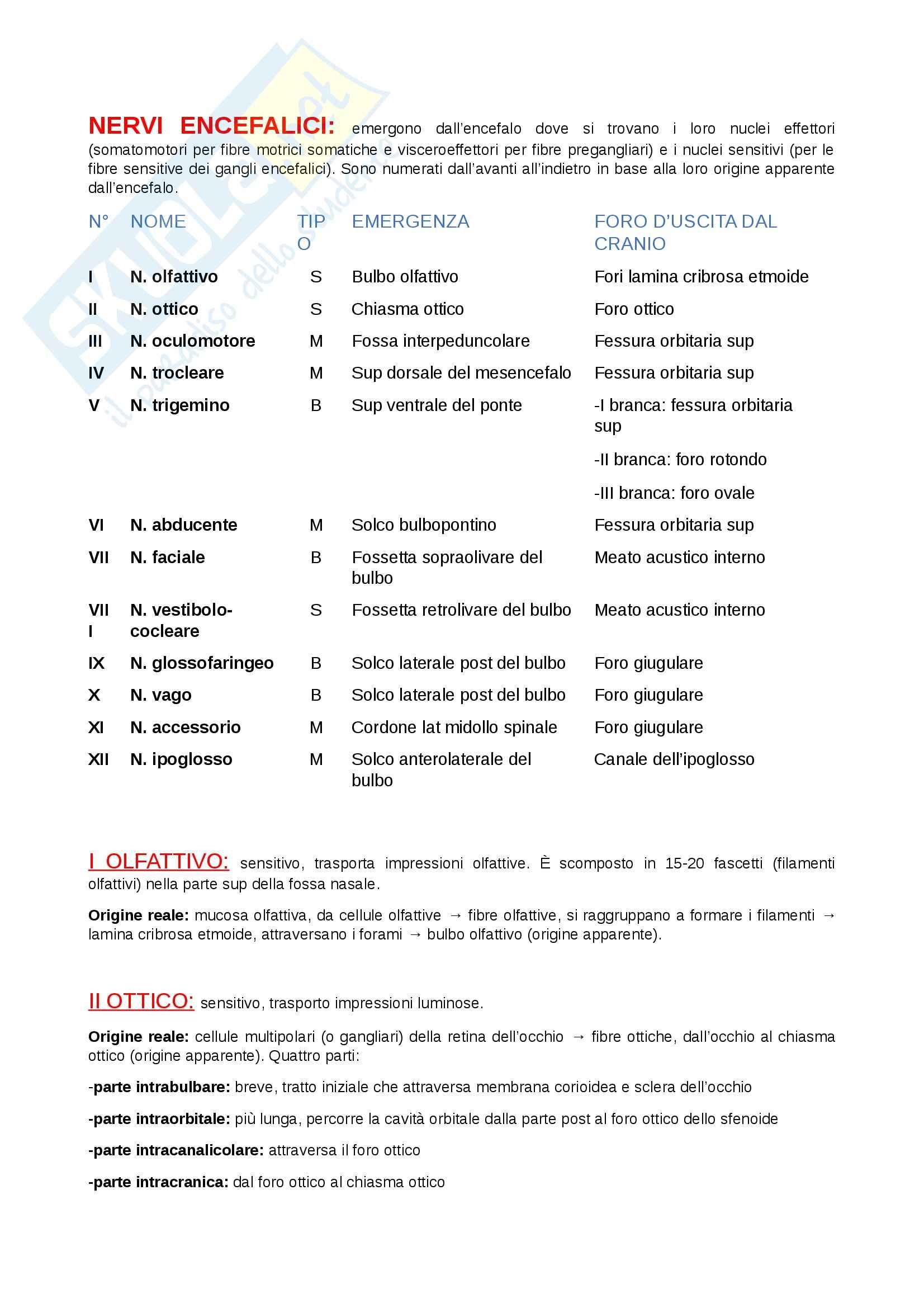 Nervi encefalici: Appunti di Anatomia