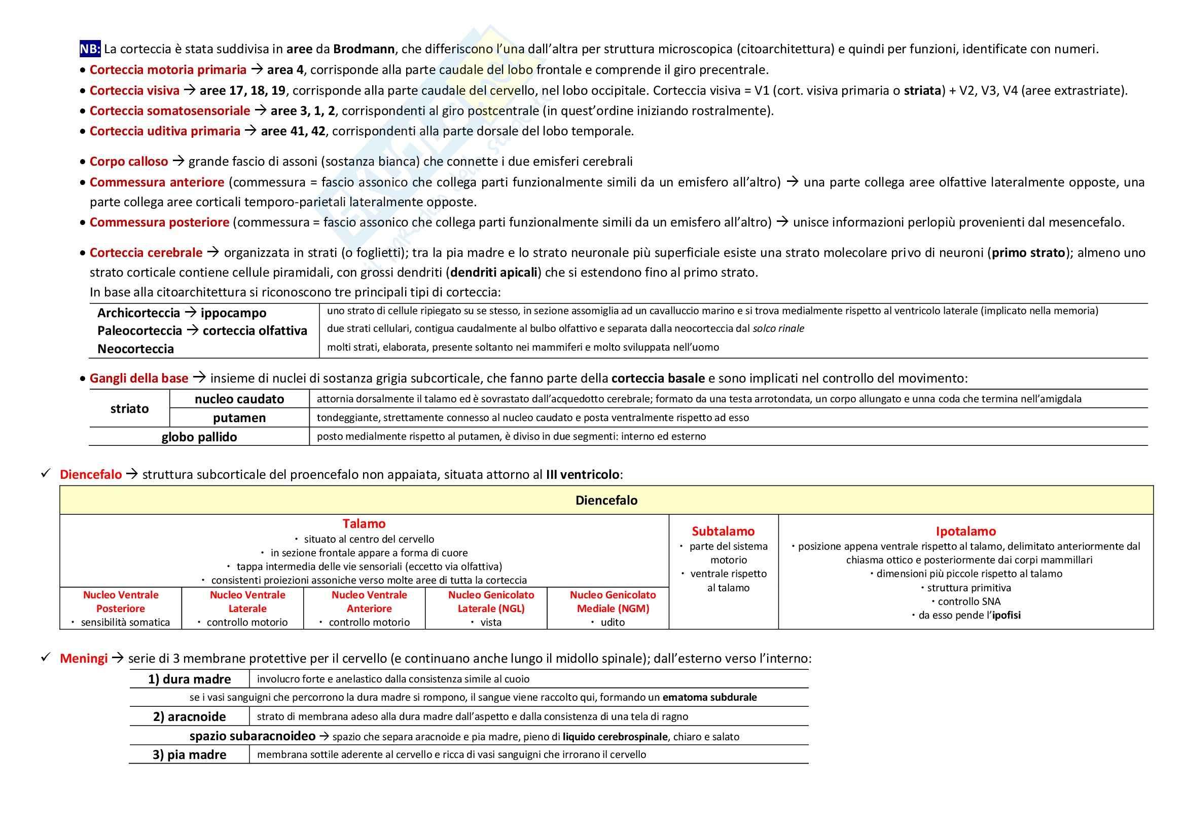 Basi neurali della cognizione - Appunti Pag. 6