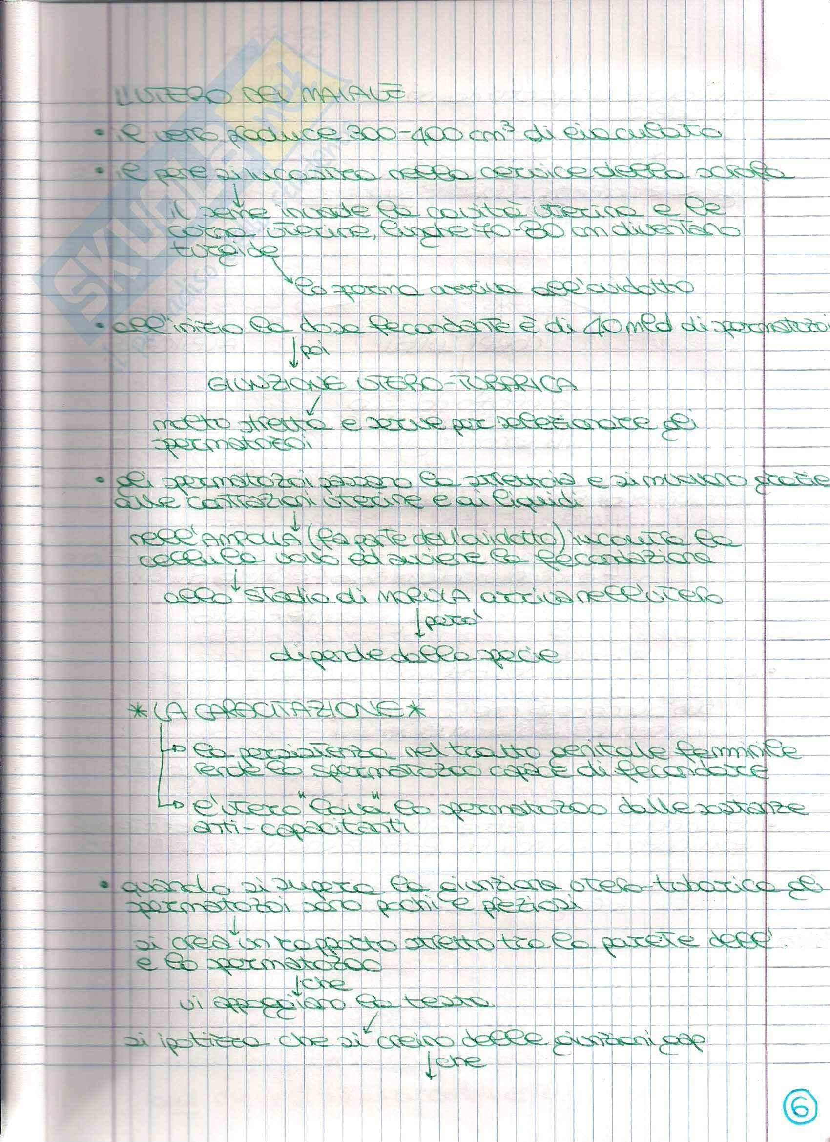 Struttura e funzione dell'apparato riproduttore - Appunti Pag. 11