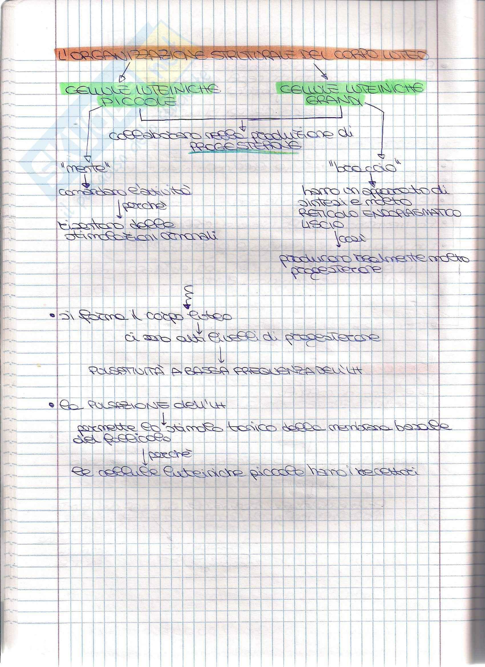 Struttura e funzione dell'apparato riproduttore - Appunti Pag. 26