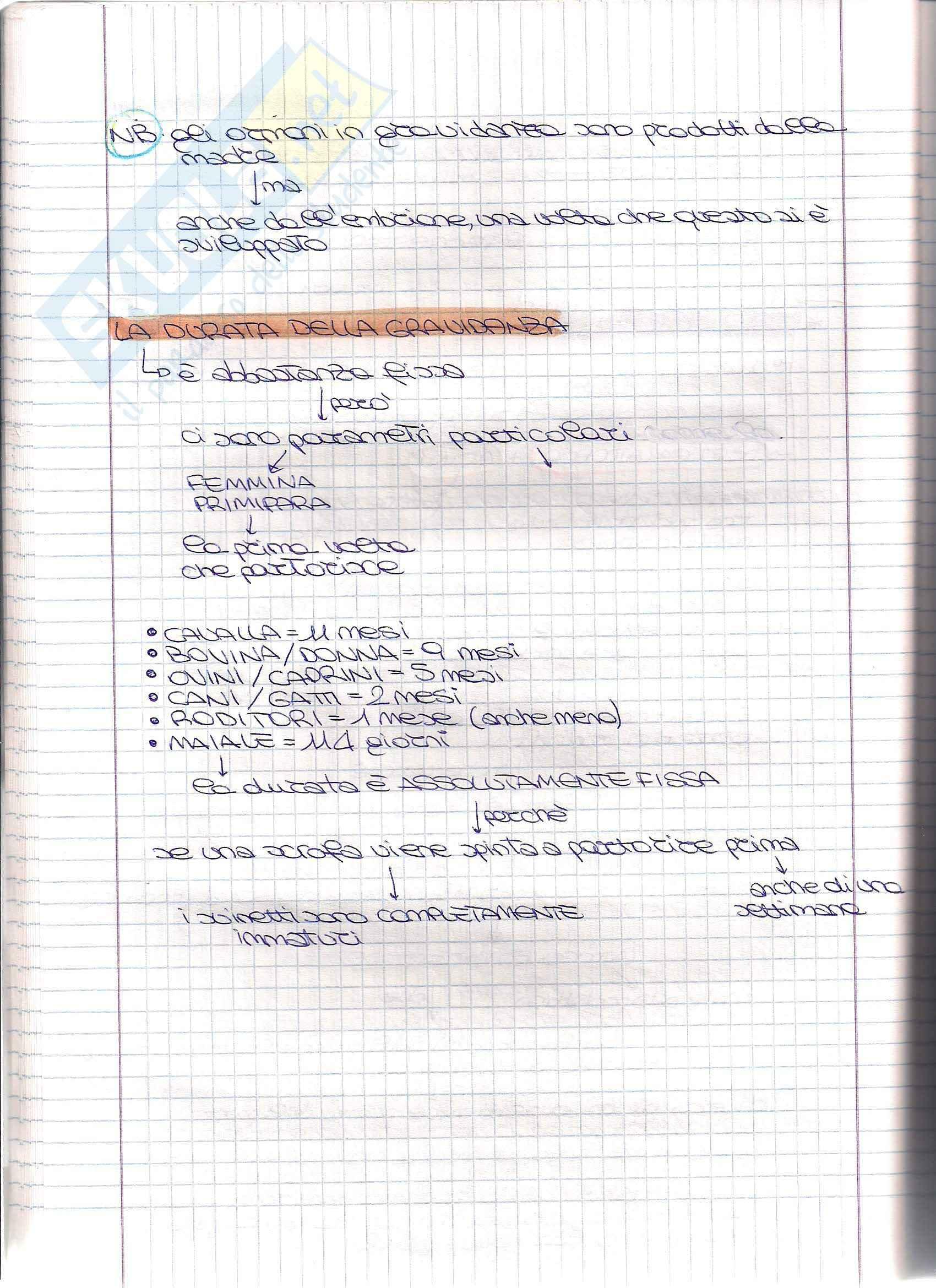 Struttura e funzione dell'apparato riproduttore - Appunti Pag. 36