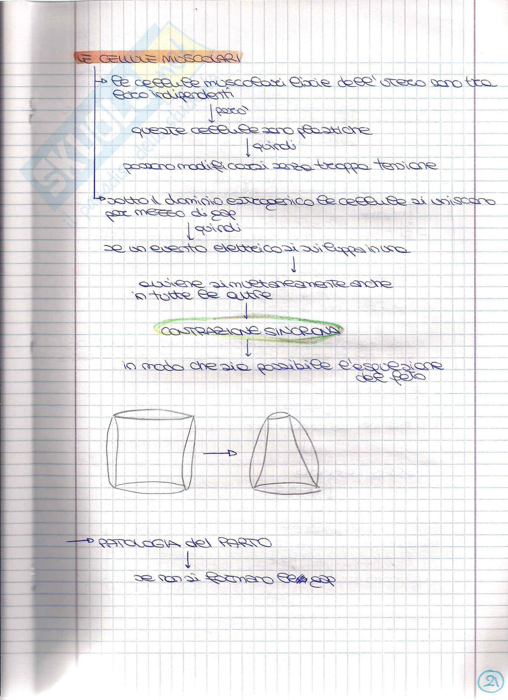 Struttura e funzione dell'apparato riproduttore - Appunti Pag. 41