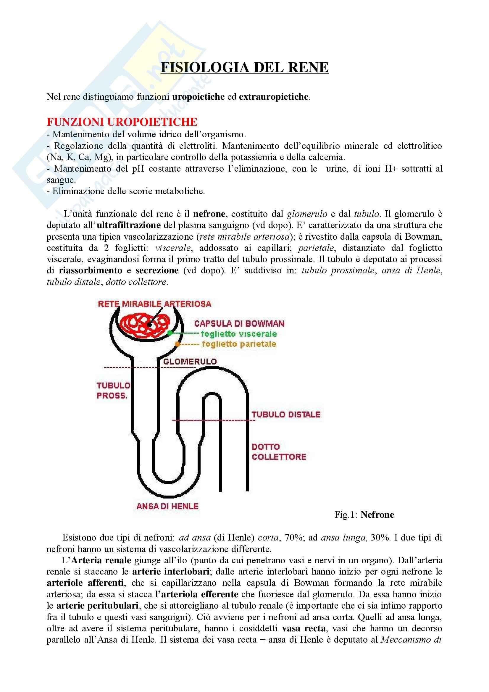 Fisiologia – Fisiologia del Rene