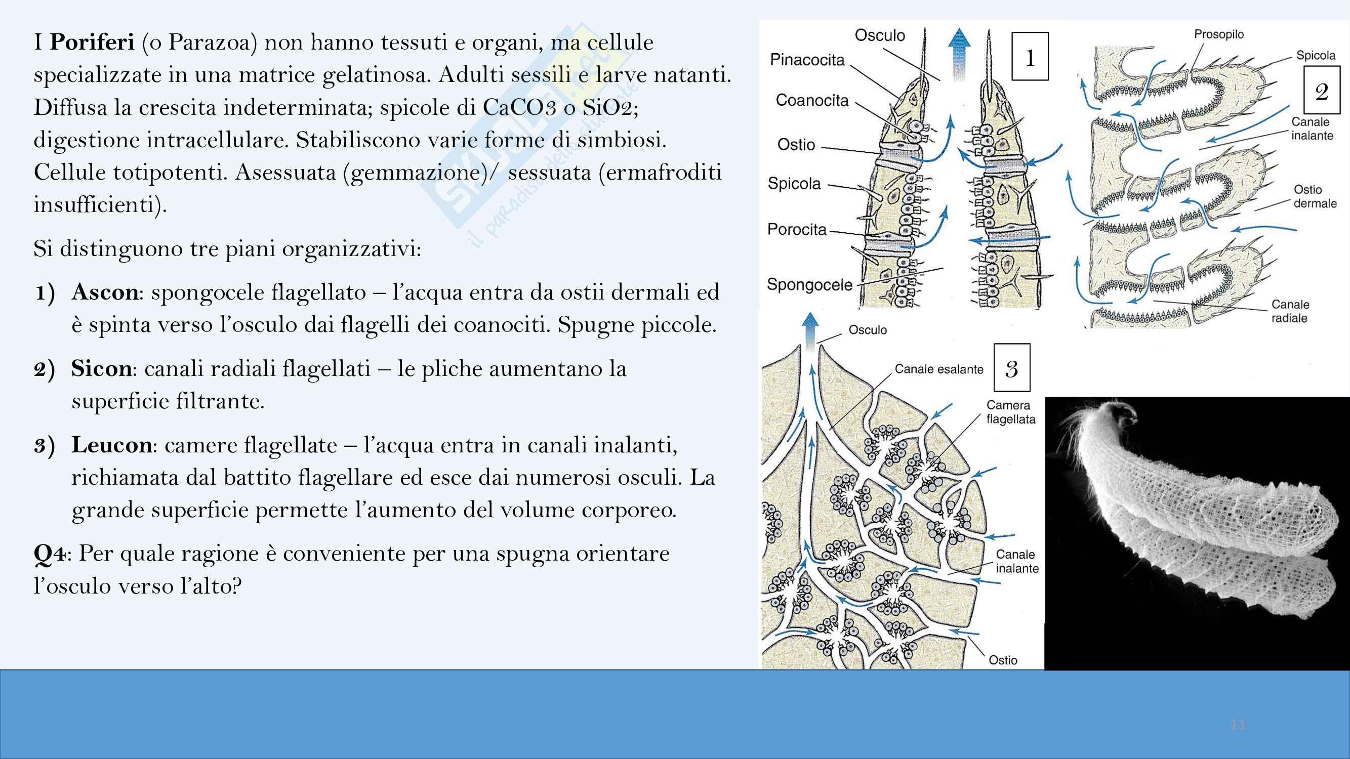 Riassunti di zoologia,  anno I Pag. 11