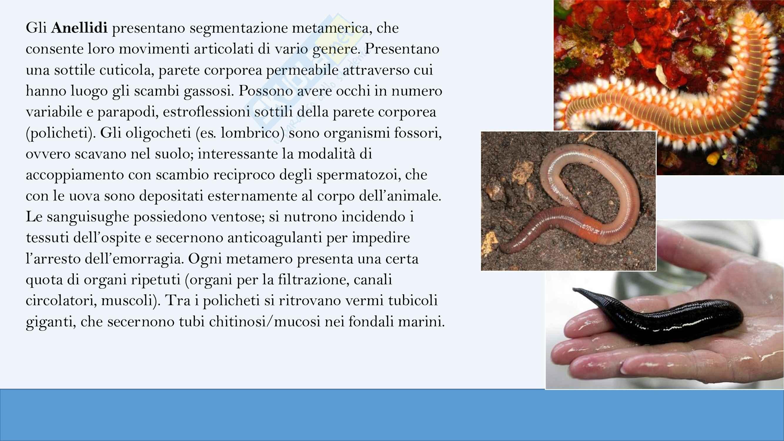 Riassunti di zoologia,  anno I Pag. 21