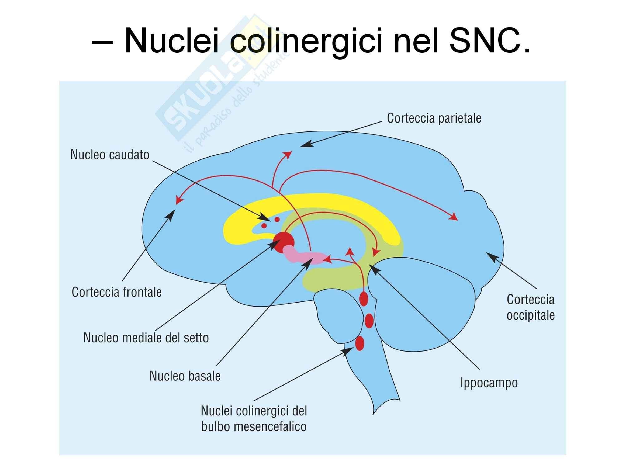 Nuclei colinergici nel SNC - farmacologia