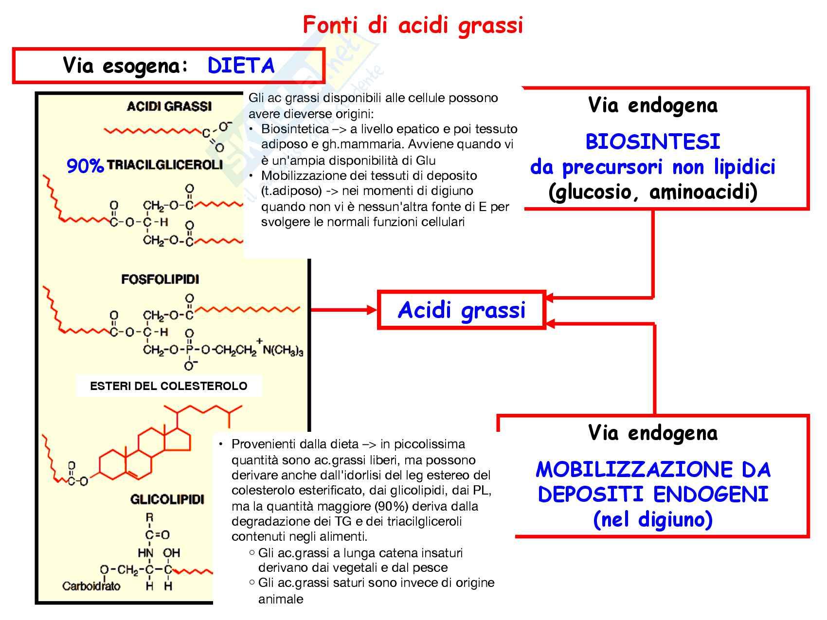 11 Metabolismo lipidi alimentari nell'enterocita e loro trasporto via chilomicroni