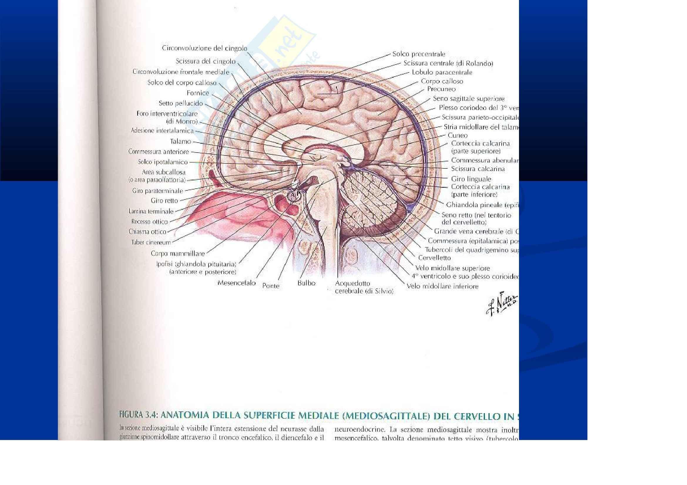 Anatomia III – Diencefalo e cervelletto – Slides
