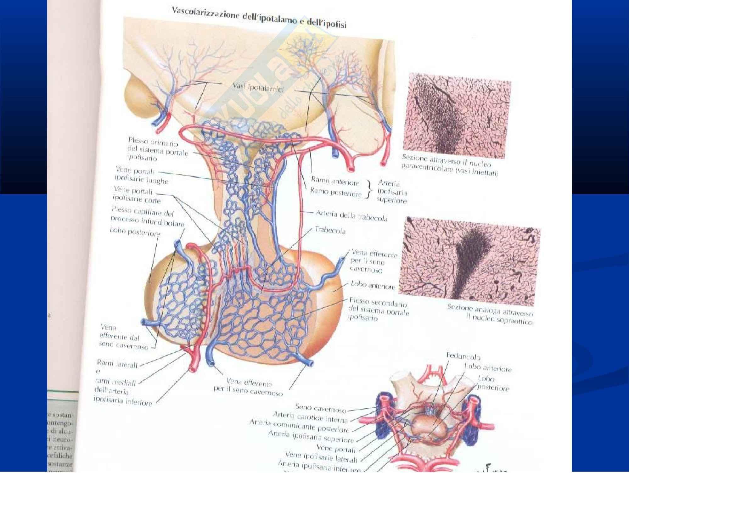 Anatomia III – Diencefalo e cervelletto – Slides Pag. 11