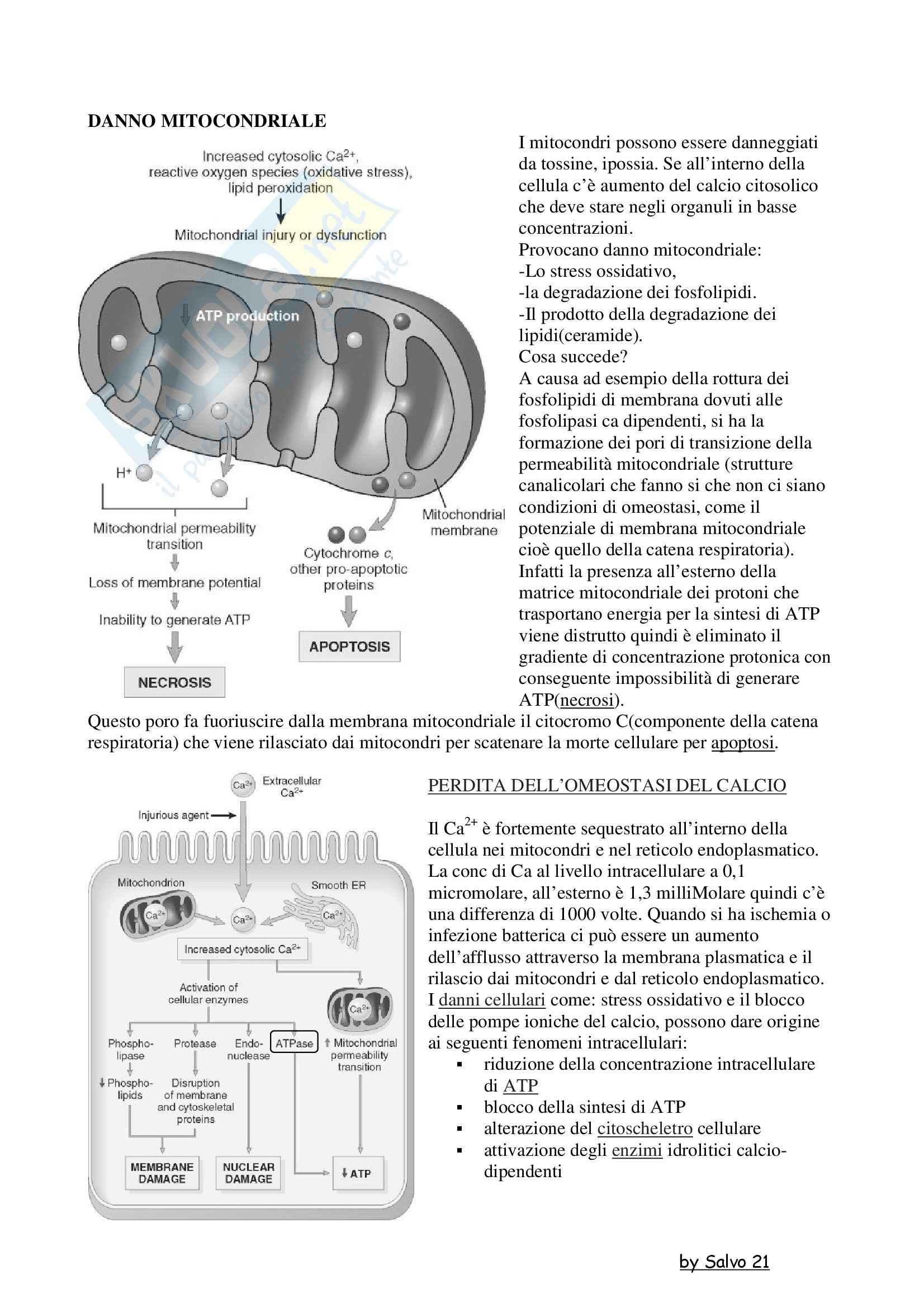 Patologia generale - il danno mitocondriale