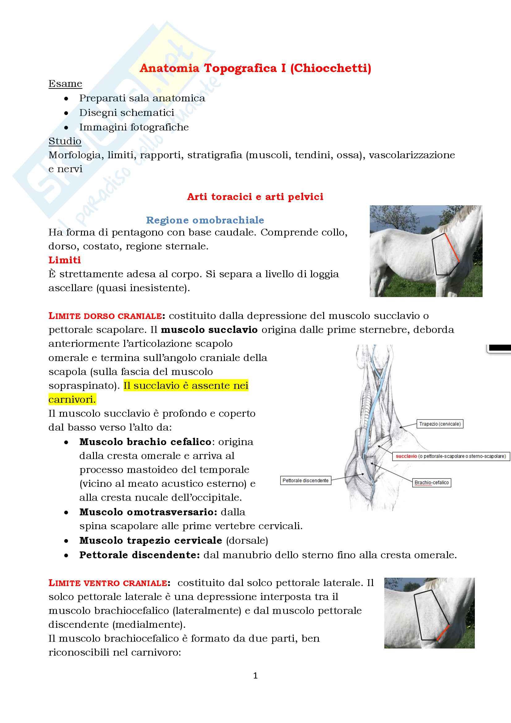 Anatomia Topografica Veterinaria - arto toracico e pelvico