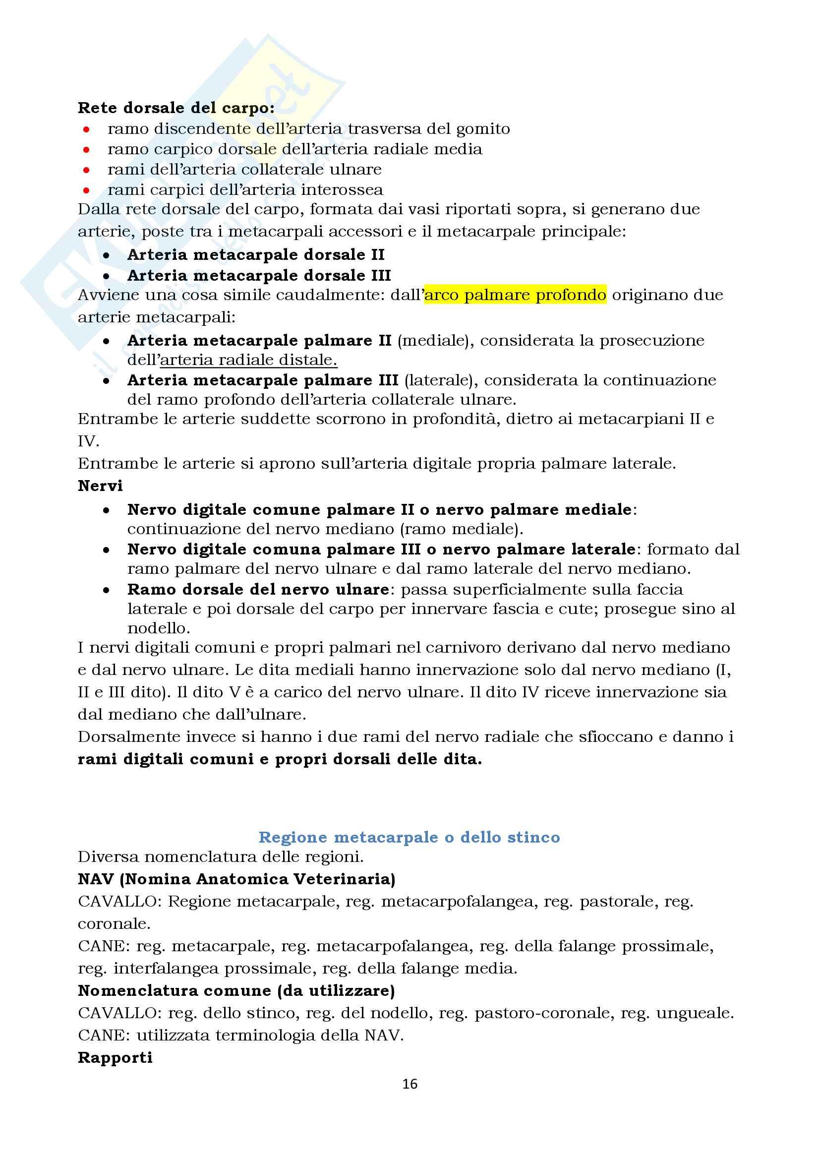 Anatomia Topografica Veterinaria - arto toracico e pelvico Pag. 16