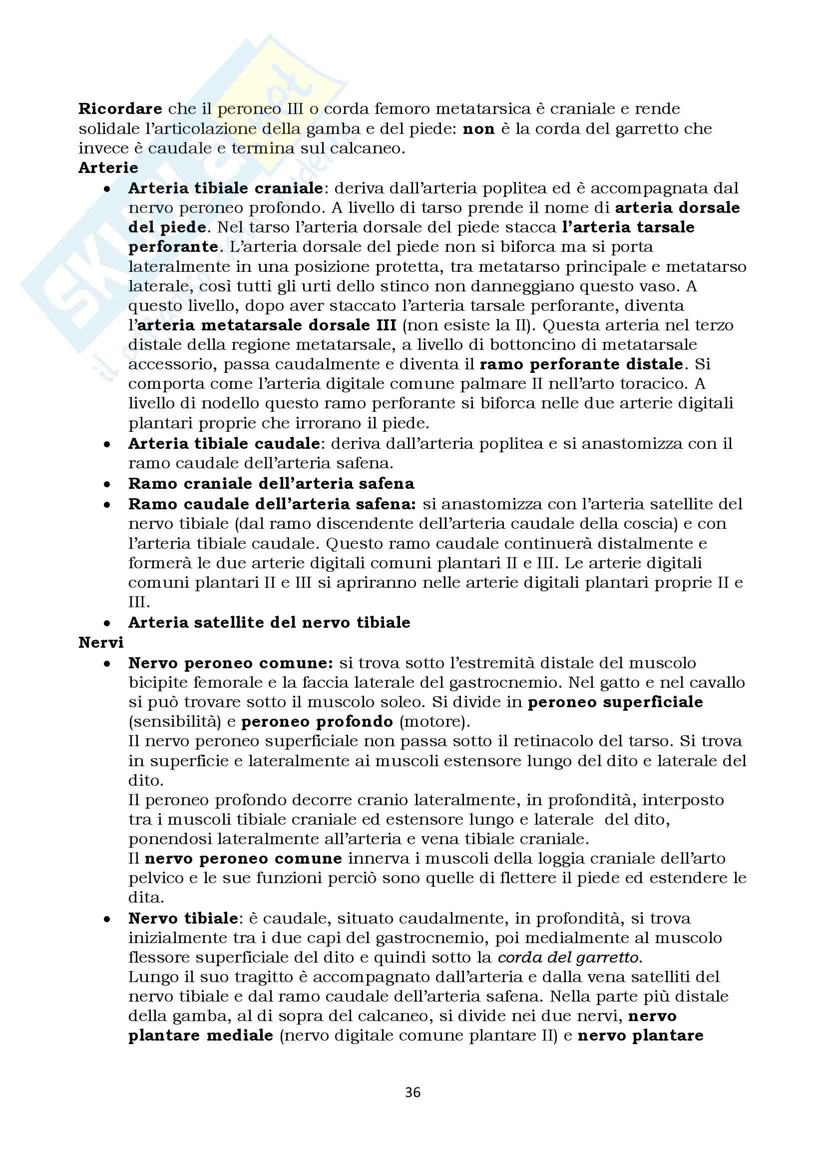 Anatomia Topografica Veterinaria - arto toracico e pelvico Pag. 36