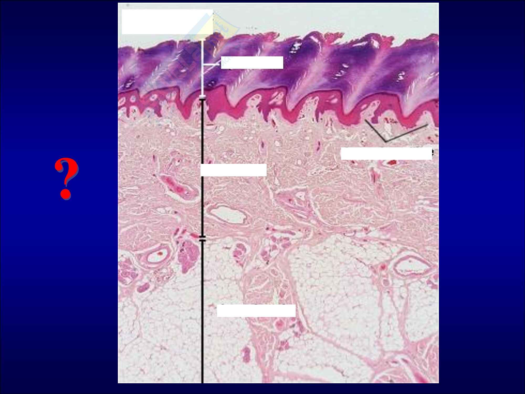 Dermatiti Bollose Pag. 2
