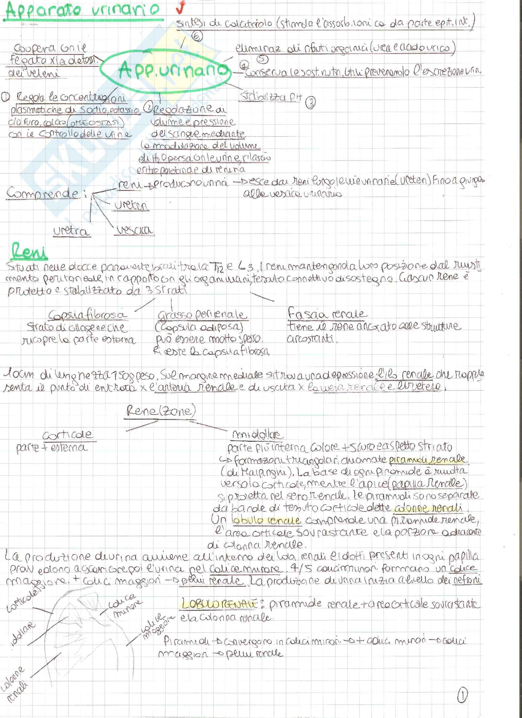 appunto E. Silvestre Anatomia degli organi e degli apparati