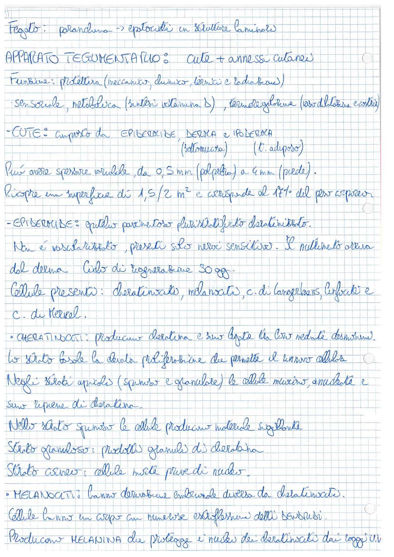 Anatomia dell'uomo - Appunti Pag. 16