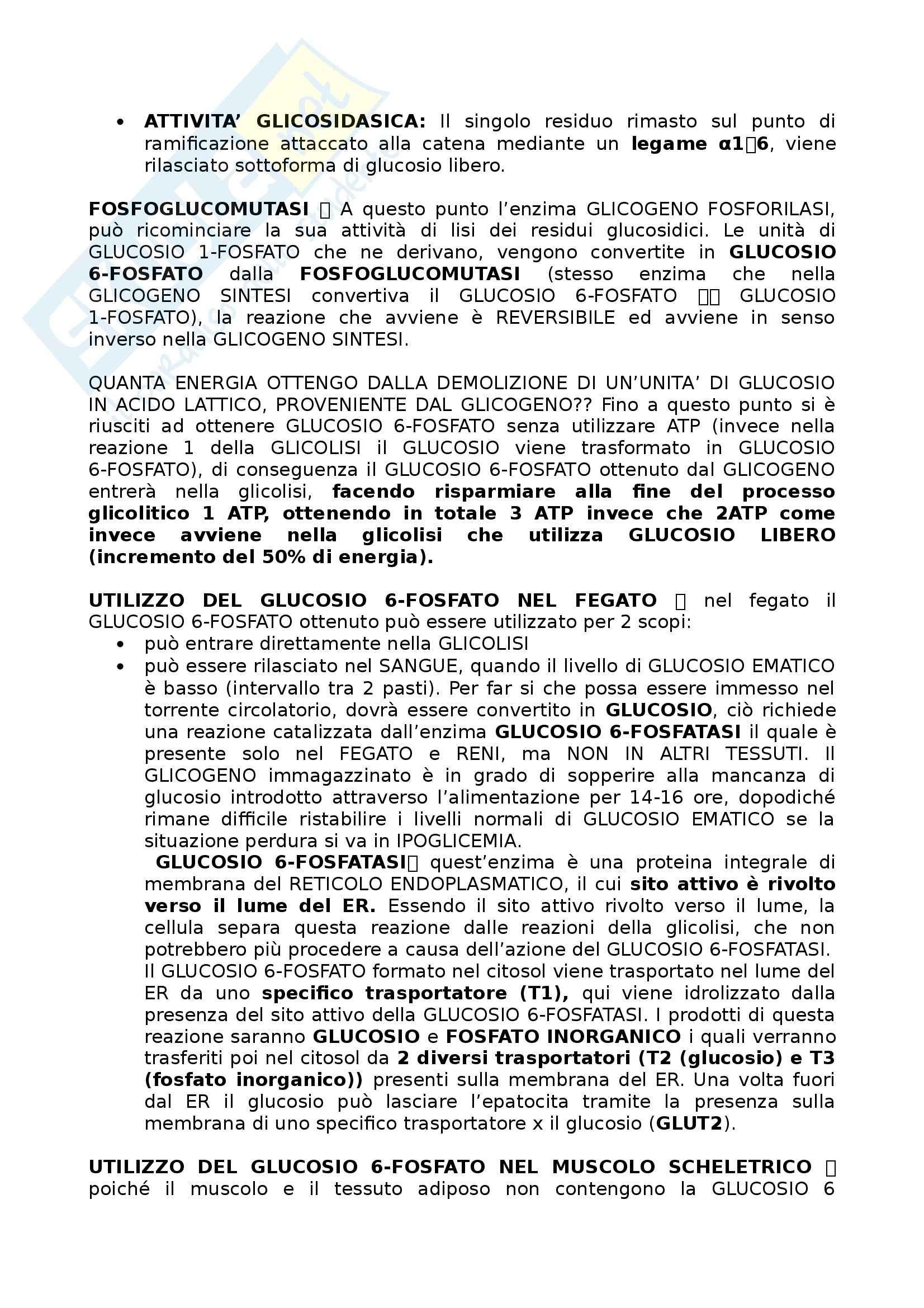 Riassunto esame Biochimica I, prof. Stocchi, libro consigliato Principi di Biochimica, Lehninger Pag. 16