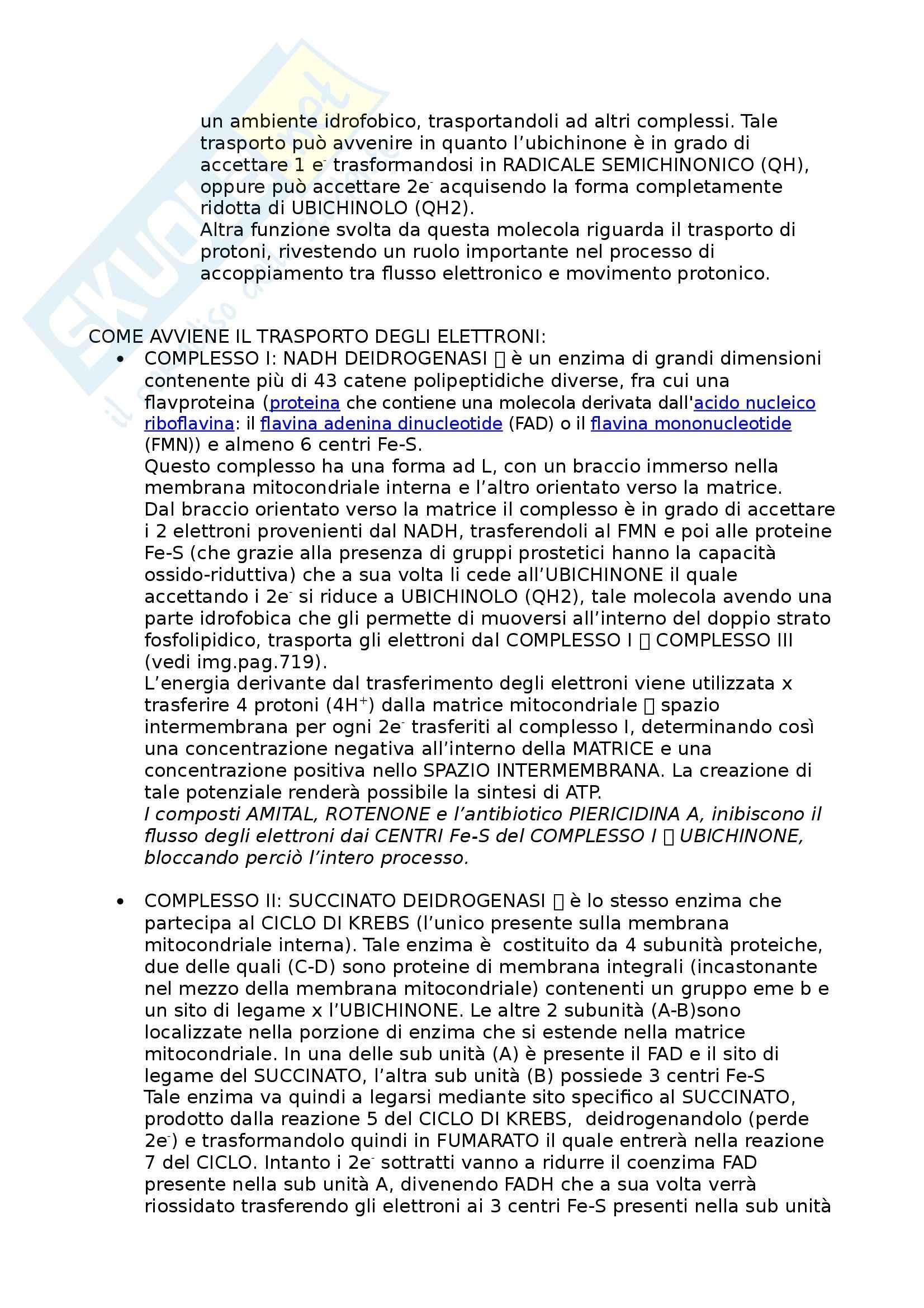 Riassunto esame Biochimica I, prof. Stocchi, libro consigliato Principi di Biochimica, Lehninger Pag. 36