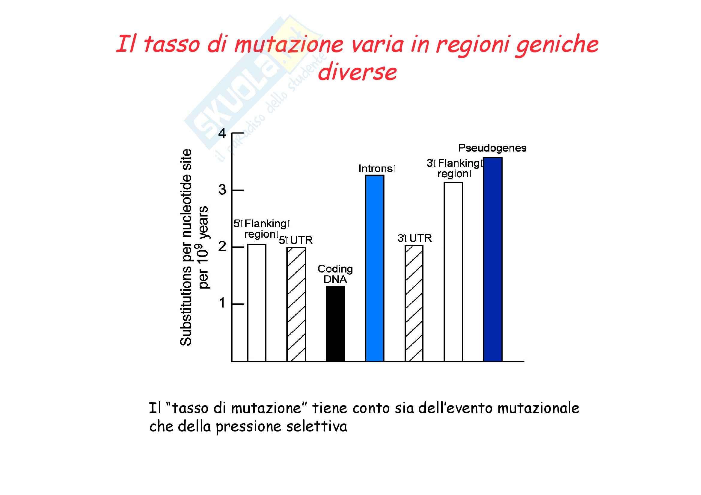 Genetica umana - alleli e Mendel - Appunti Pag. 11