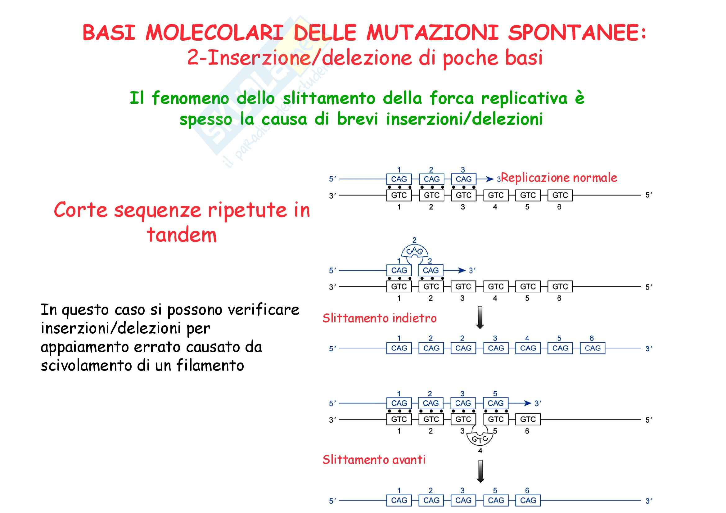 Genetica umana - alleli e Mendel - Appunti Pag. 16