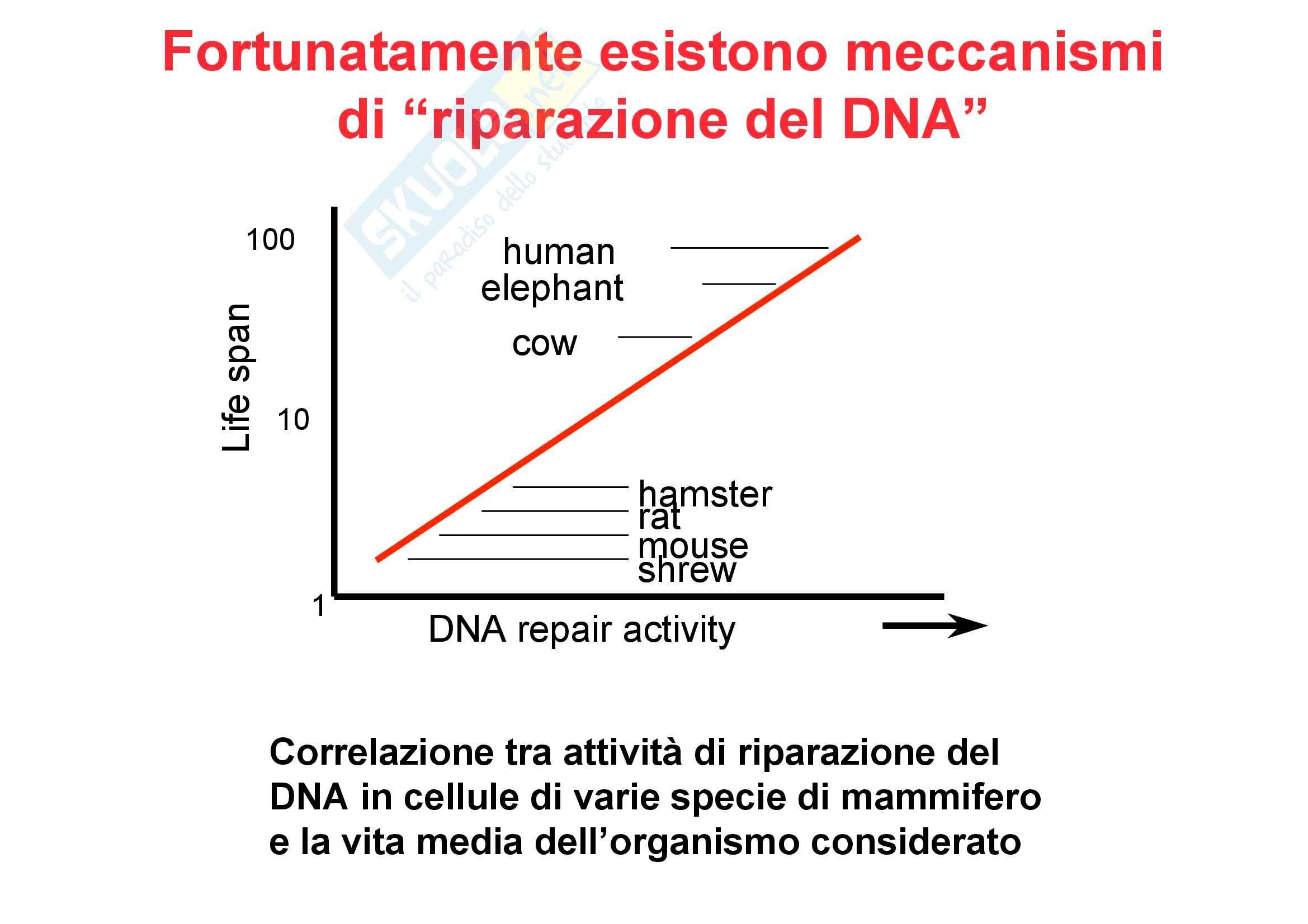 Genetica umana - alleli e Mendel - Appunti Pag. 26