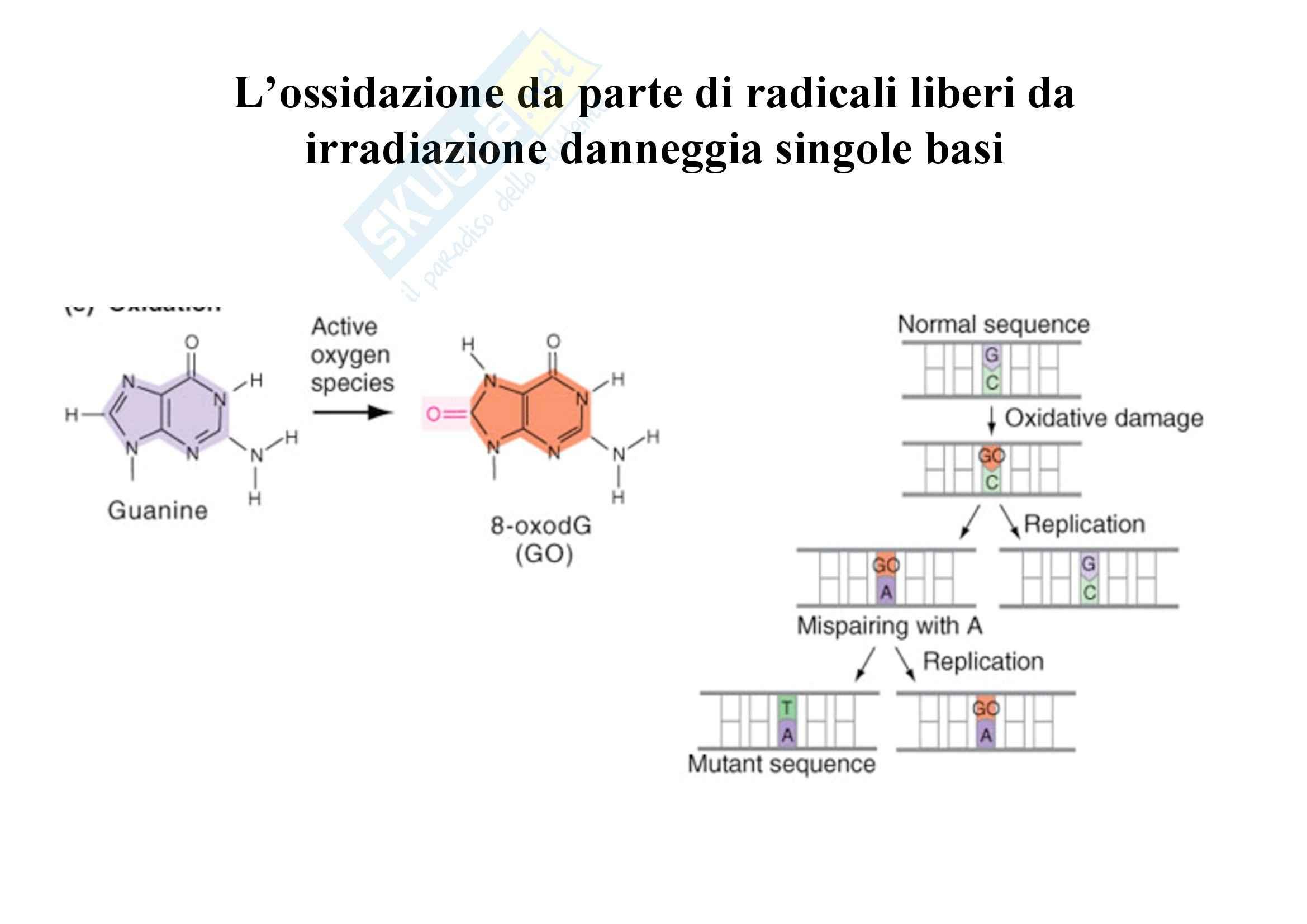 Genetica umana - alleli e Mendel - Appunti Pag. 6