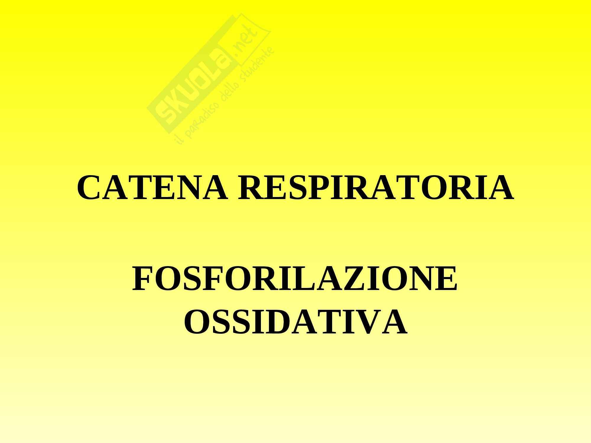 Biochimica - catena respiratoria e fosforilazione
