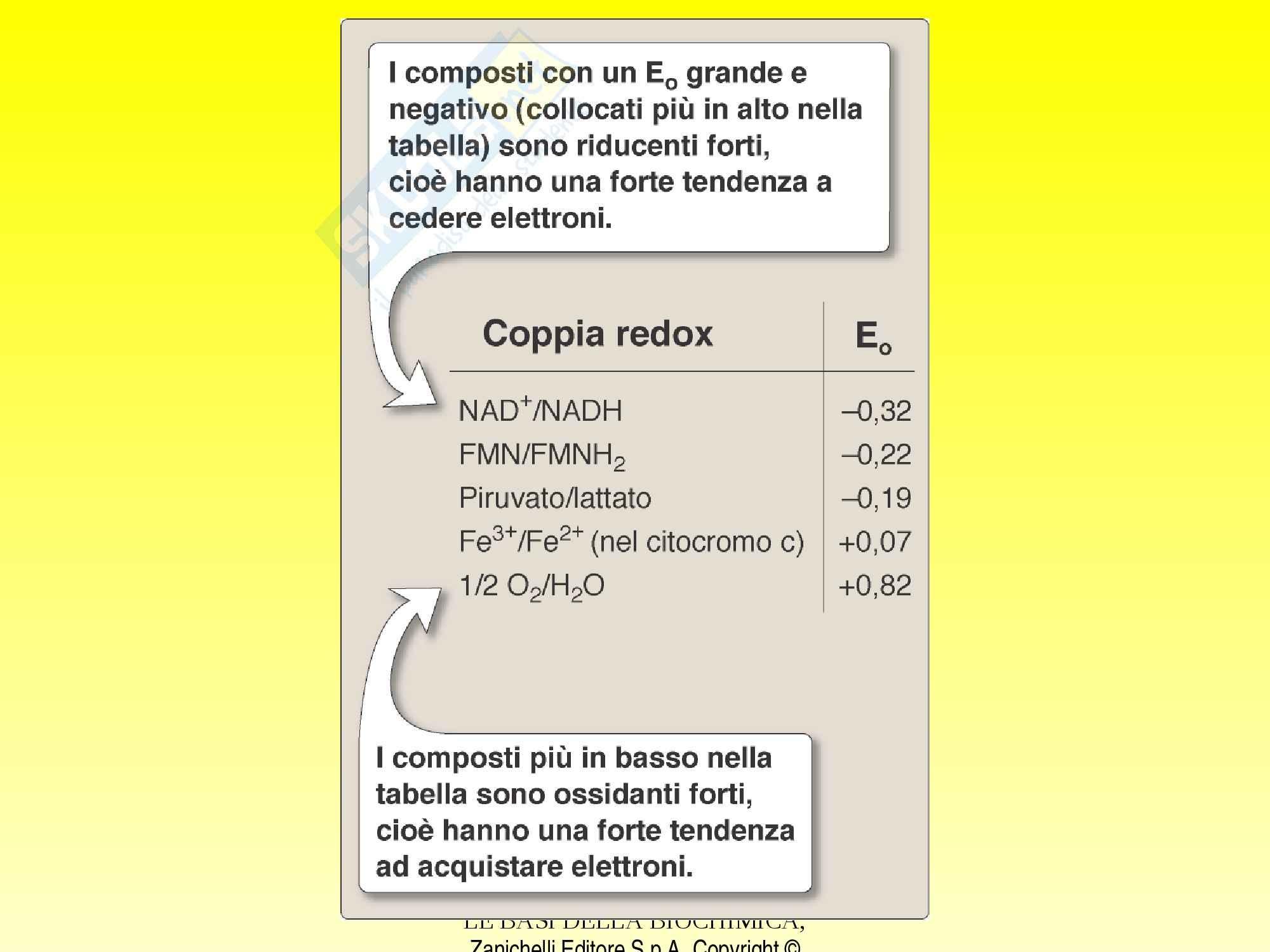 Biochimica - catena respiratoria e fosforilazione Pag. 16