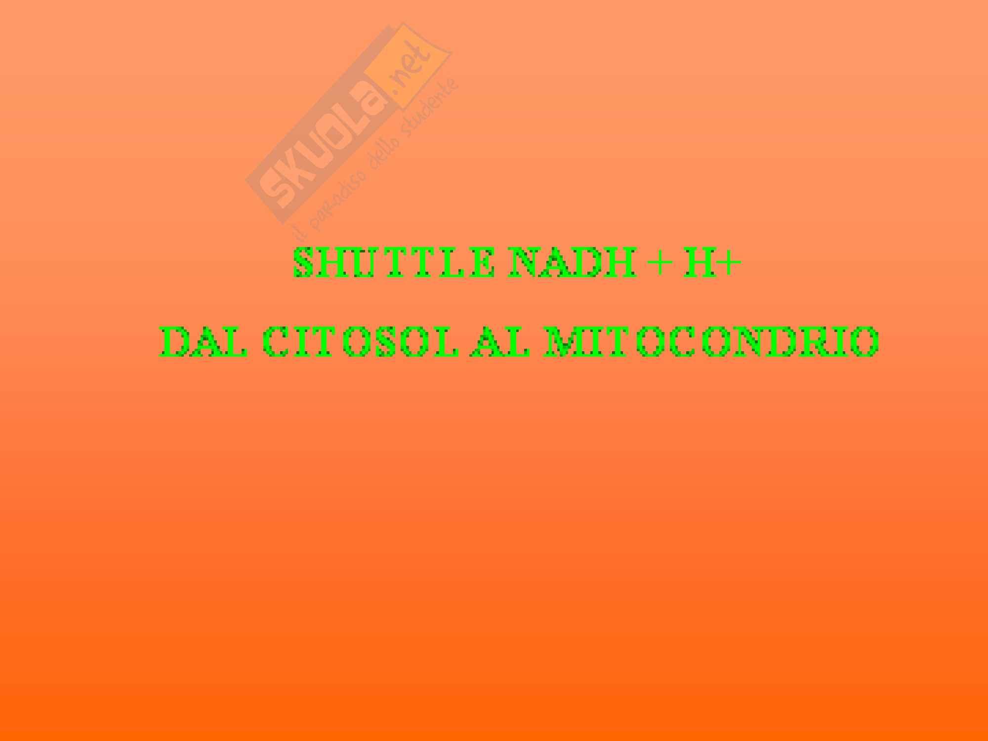 Biochimica - catena respiratoria e fosforilazione Pag. 36